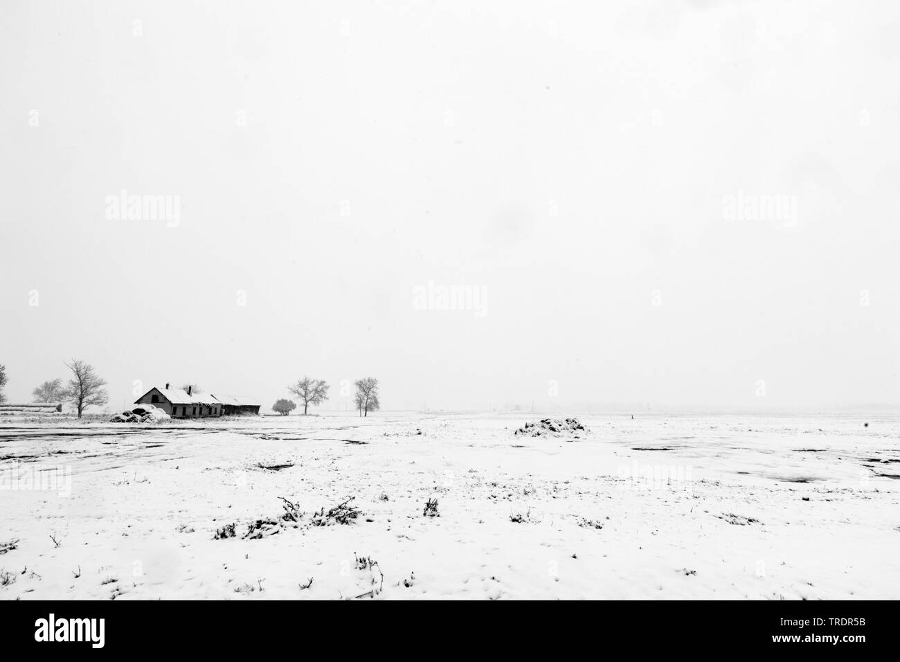 Winterlandschaft mit Bauernhaus in Schwarzweiss, Ungarn | Winter landscape with farmhouse in black and white, Hungary | BLWS509151.jpg [ (c) blickwink - Stock Image