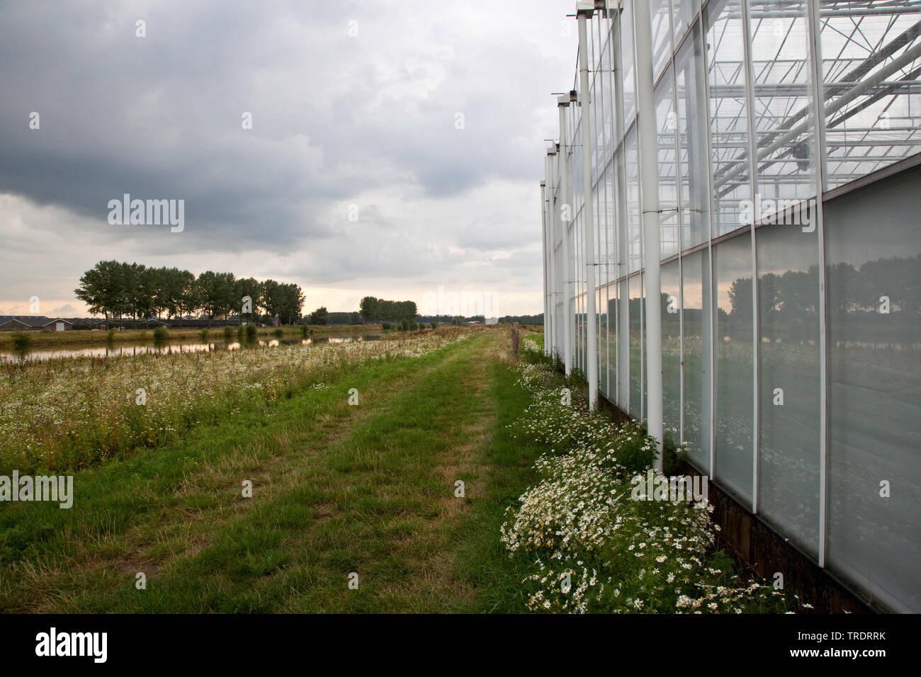 Gewaechshaeuser in Bergenden aan de Linge, Niederlande | Greenhouse area Bergenden aan de Linge, Netherlands | BLWS509662.jpg [ (c) blickwinkel/AGAMI/ - Stock Image