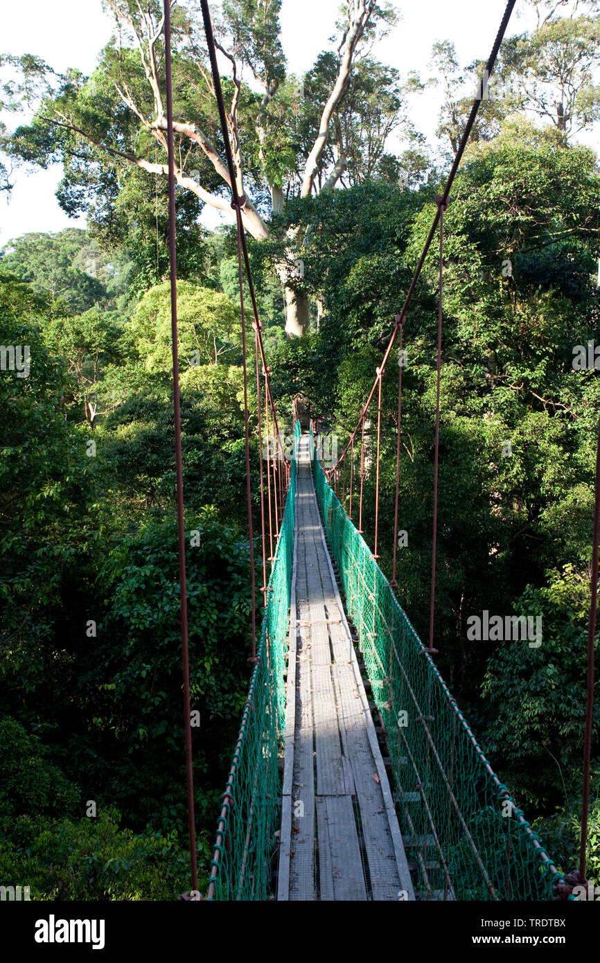 Canopy Walk Danum Valley, Malaysia, Borneo, danum Stock Photo