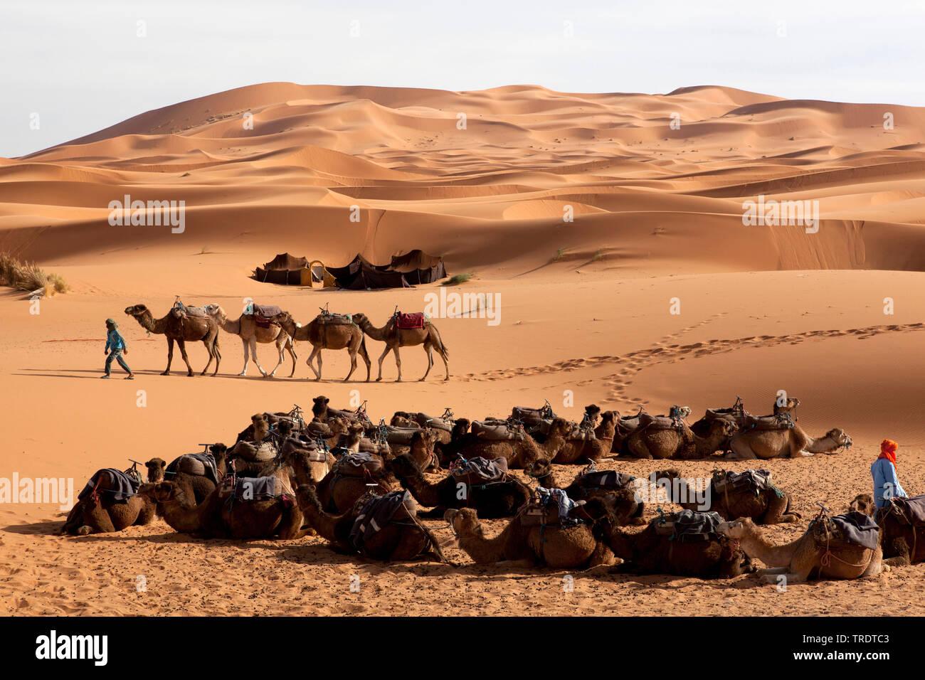Karawane in der Sandwueste Erg Chebbi, Marokko | caravan in the Erg Chebbi desert, Morocco | BLWS510095.jpg [ (c) blickwinkel/AGAMI/A. Nusse Tel. +49 - Stock Image