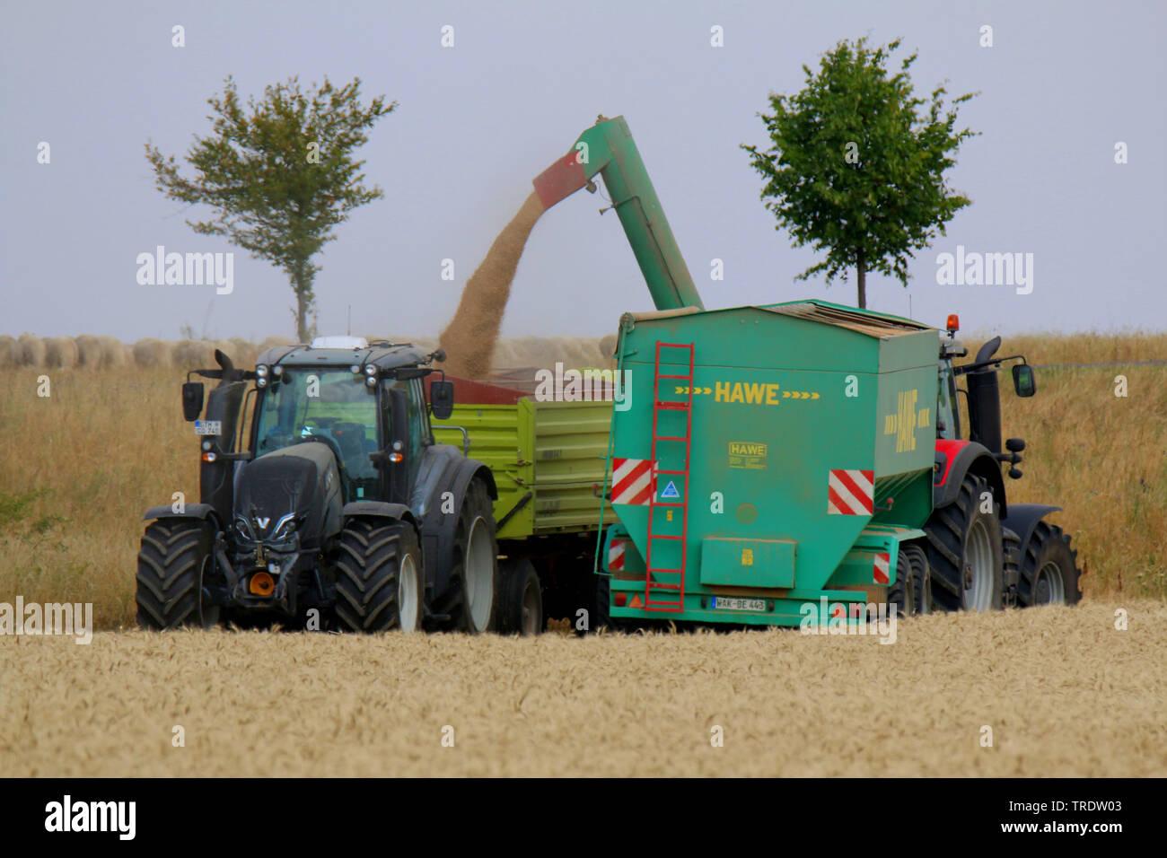 Getreideernte, Deutschland, Thueringen | harvesting of crop, Germany, Thueringen | BLWS510524.jpg [ (c) blickwinkel/M. Henning Tel. +49 (0)2302-279322 - Stock Image