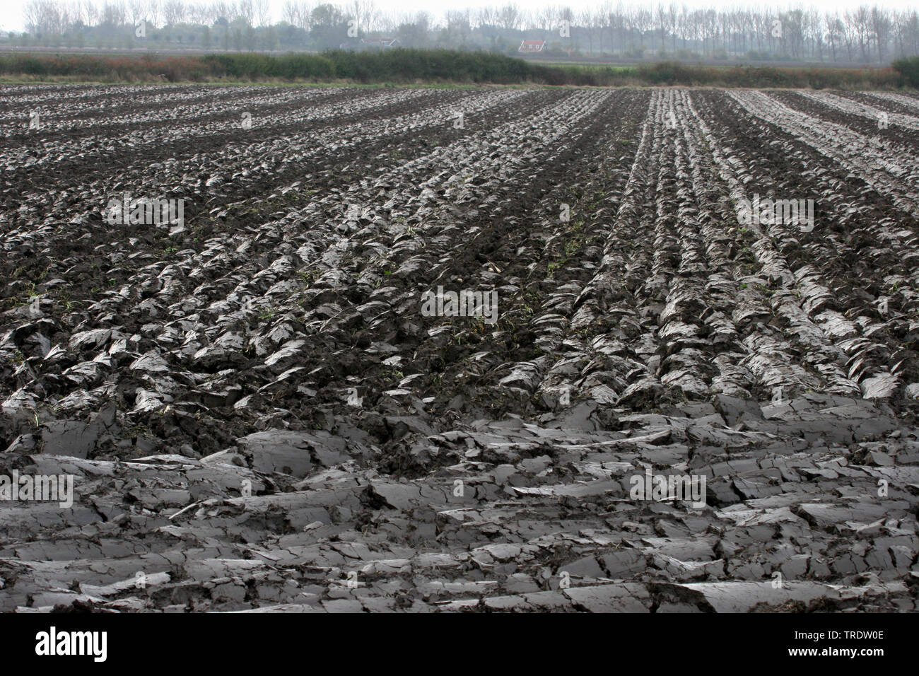 Klei-Boden; Tonboden, fruchtbarer Ackerboden nach dem Pfluegen, Niederlande | clay ground, fruitful field after ploughing, Netherlands | BLWS510545.jp - Stock Image