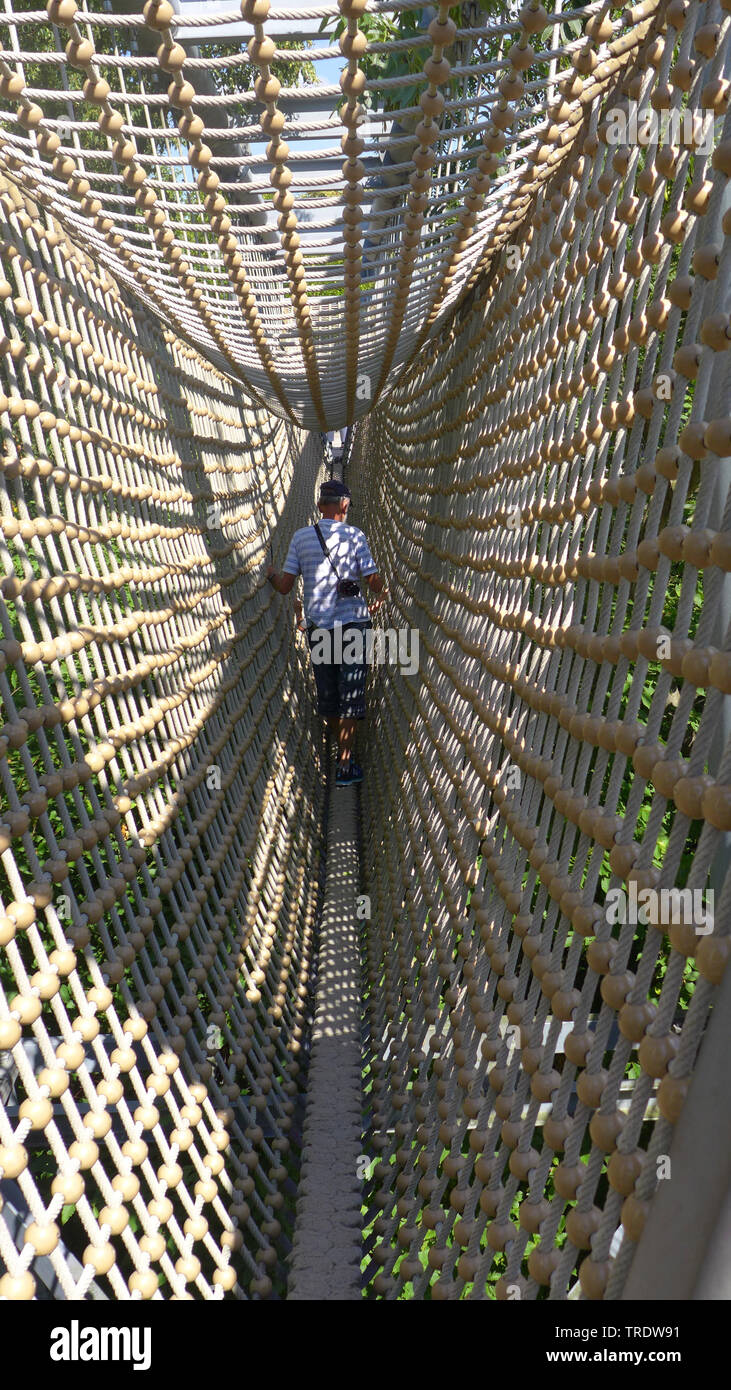 Seil-Haengebruecke im Baumkronenpfad, Deutschland, Thueringen, Hainich Nationalpark   man on rope bridge of treetop walk, Germany, Thueringen, Hainich - Stock Image