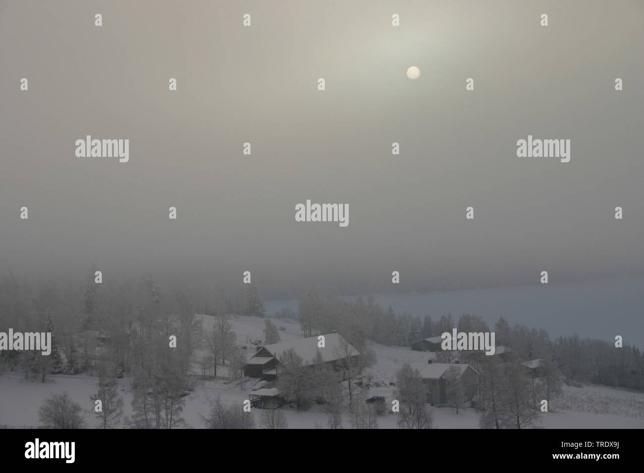 Lomen im dichten Nebel, Norwegen, Lomen   Lomen covered in fog, Norway, Lomen   BLWS511588.jpg [ (c) blickwinkel/AGAMI/K. Wilmers Tel. +49 (0)2302-279 - Stock Image