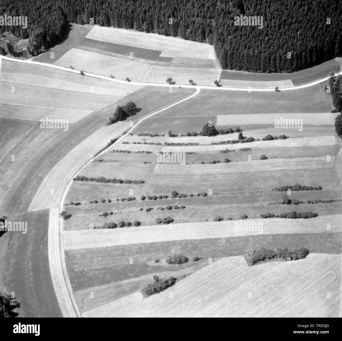 field landscape with hedges before land consolidation in Bayaria, aerial picture from the year 1959, Germany, Bavaria - Stock Image