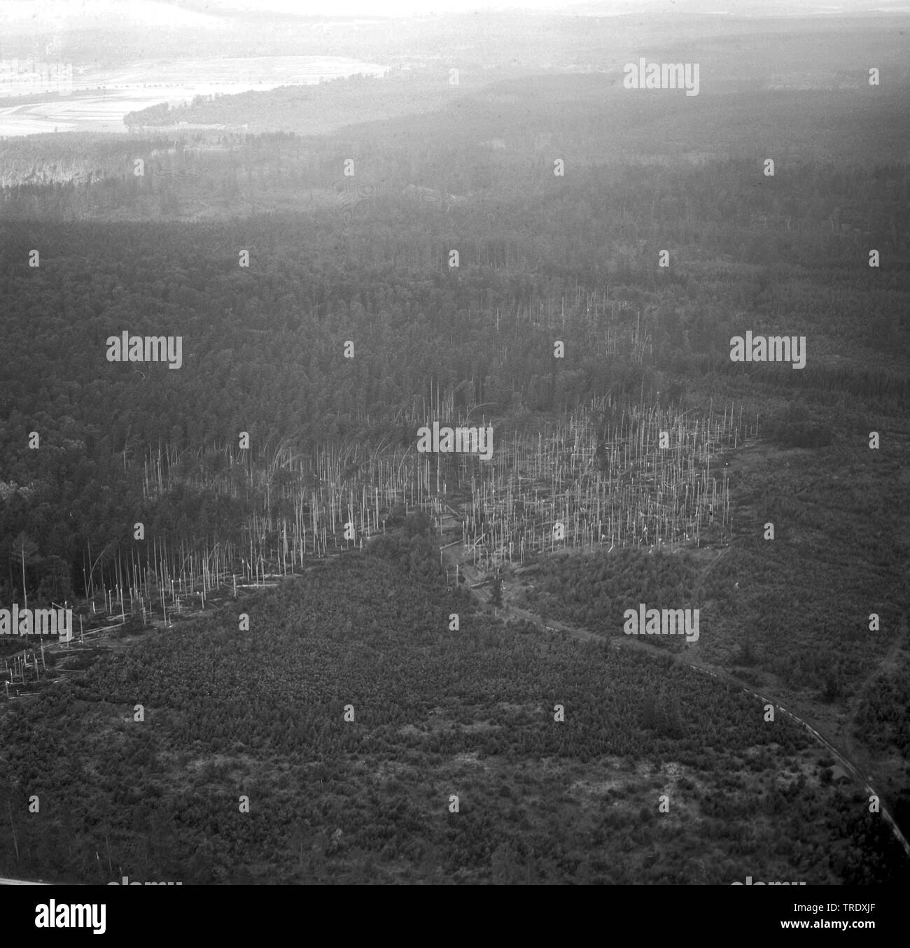 storm losses in a forest at Ingolstadt, aerial photo from the year 1960, Germany, Bavaria, Oberbayern, Upper Bavaria - Stock Image