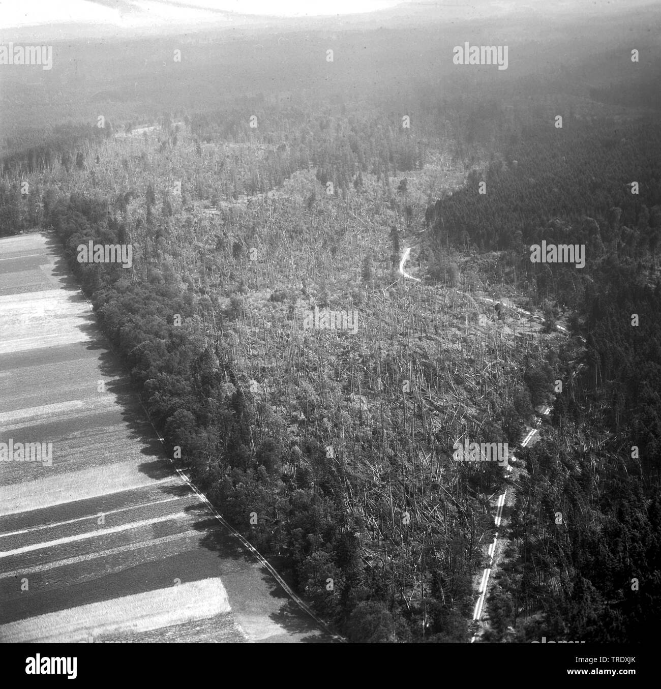 storm losses in a forest at Ingolstadt, aerial photo from the year 1960, Germany, Bavaria, Oberbayern, Upper Bavaria Stock Photo