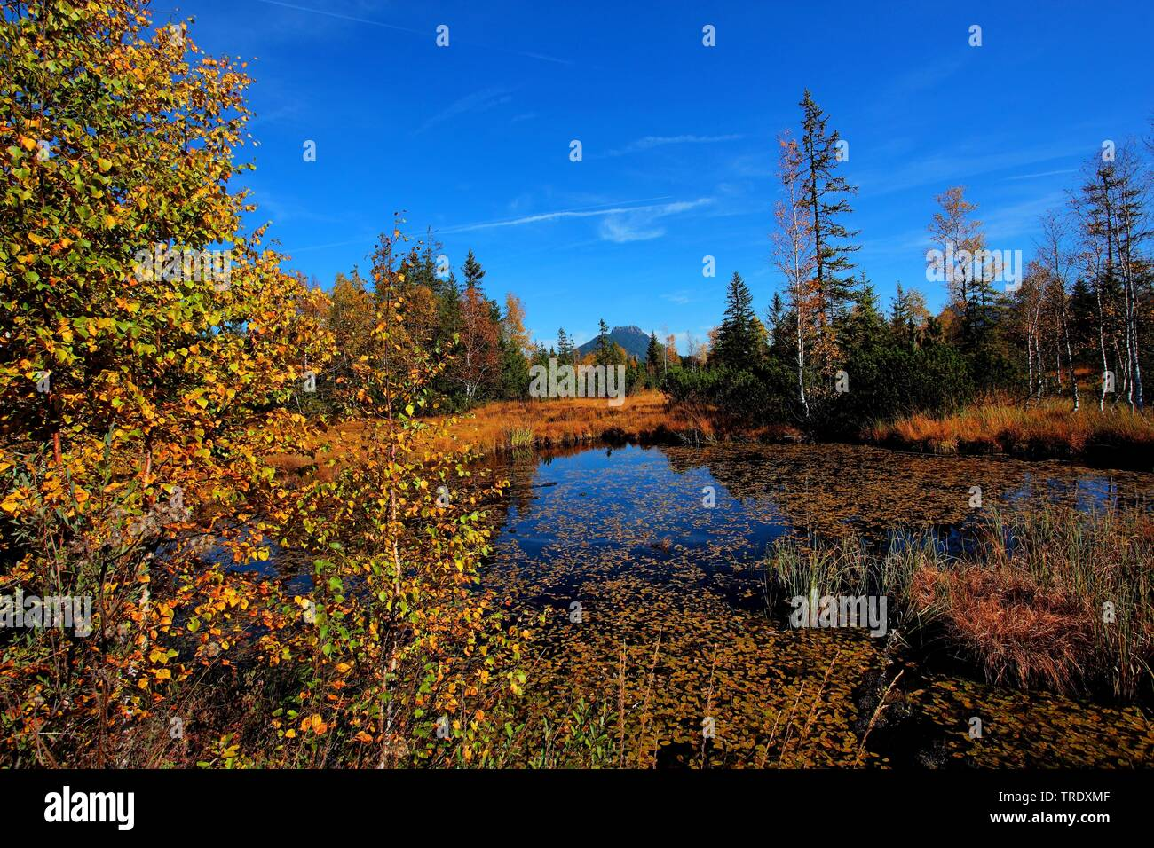 upland moor Kematsriedmoos in autumn, Germany, Bavaria, Allgaeu Stock Photo