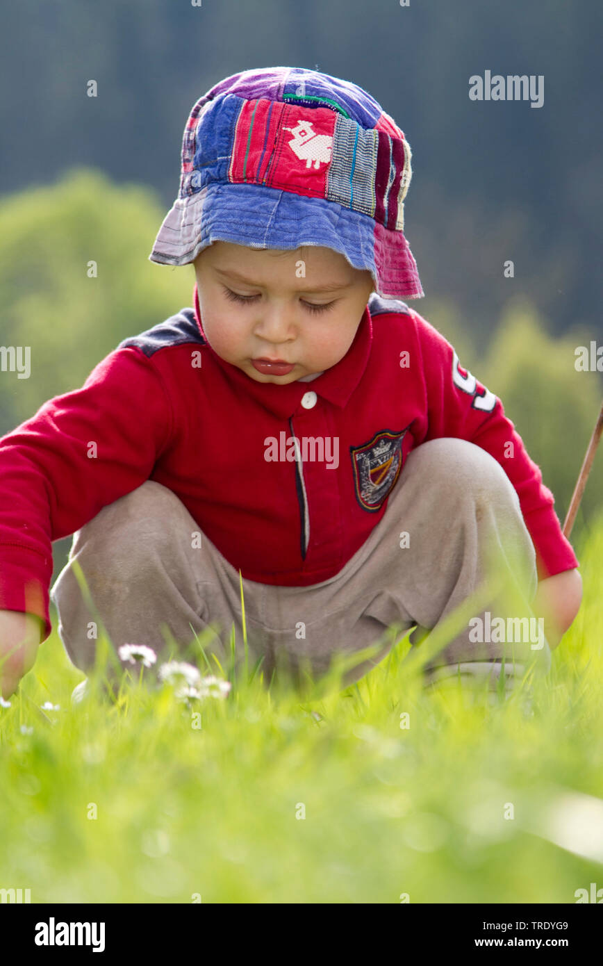 Portraet eine kleinen Jungen, der auf einer Wiese sitzend mit Gaensebluemchen spielend | Portrait of a young boy sitting on a lawn and playing with da - Stock Image
