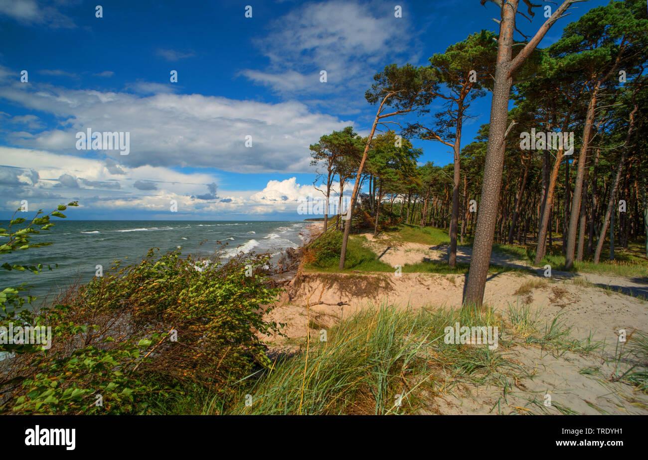 Westkueste von Darss, Deutschland, Mecklenburg-Vorpommern, Vorpommersche Boddenlandschaft Nationalpark | west coast of the Darss, Germany, Mecklenburg - Stock Image