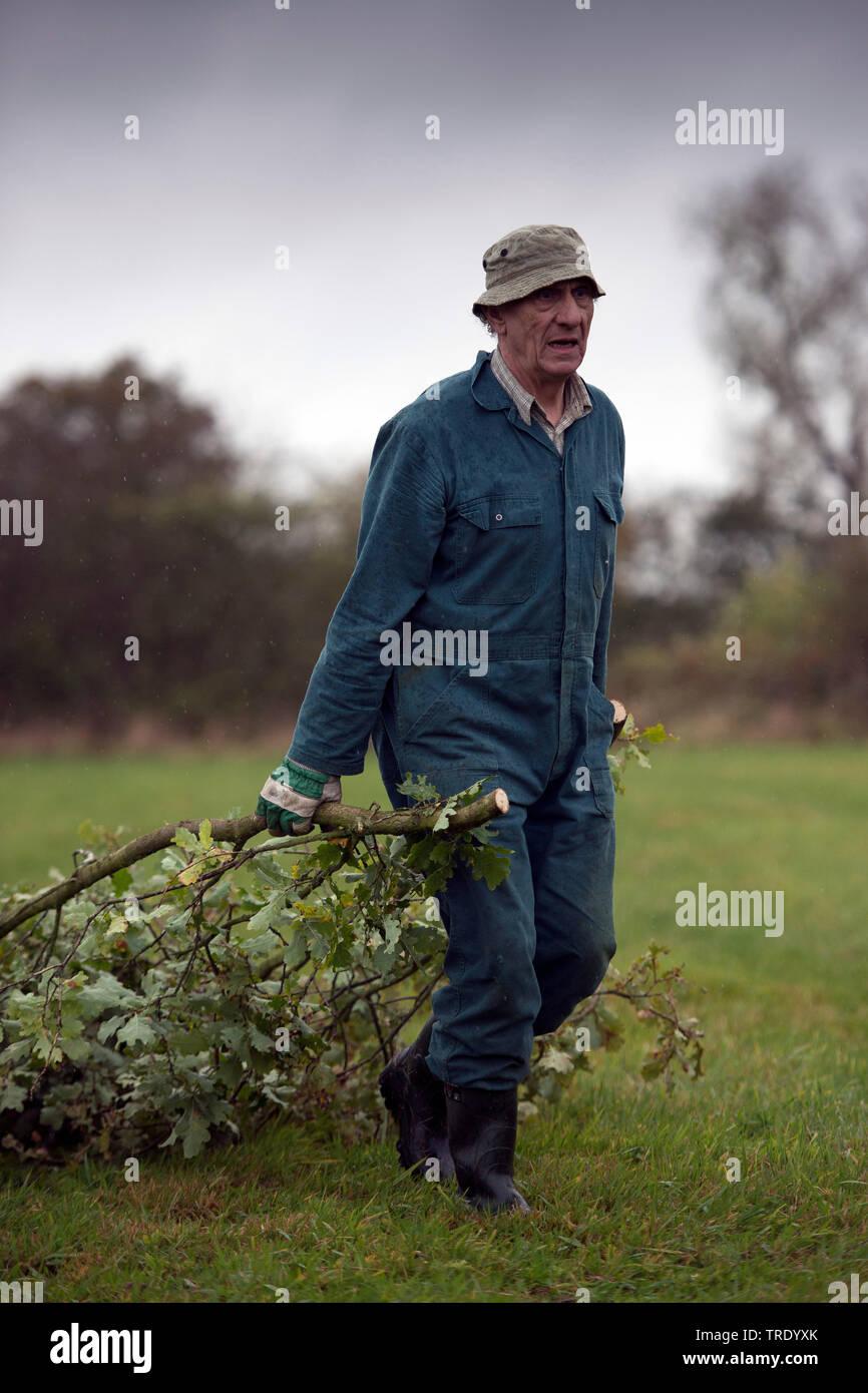Forstarbeiter entfernt abgeschnittene Aeste, Niederlande, Overijssel | worker removing cutted branches, Netherlands, Overijssel | BLWS512857.jpg [ (c) Stock Photo