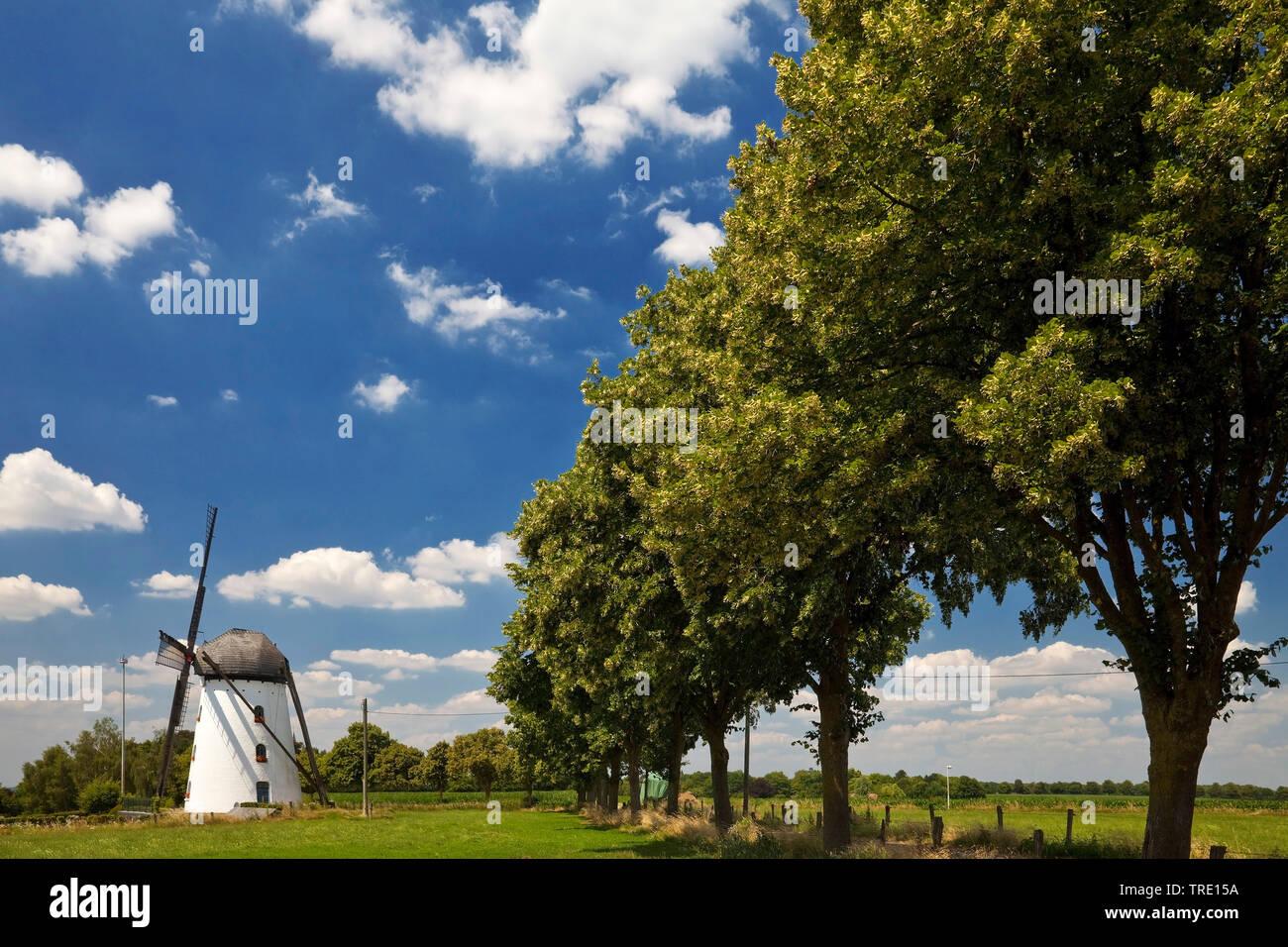 Stammesmuehle in Nettetal-Hinsebeck, Deutschland, Nordrhein-Westfalen, Nettetal | mill Stammen in Nettetal-Hinsebeck, Germany, North Rhine-Westphalia, - Stock Image