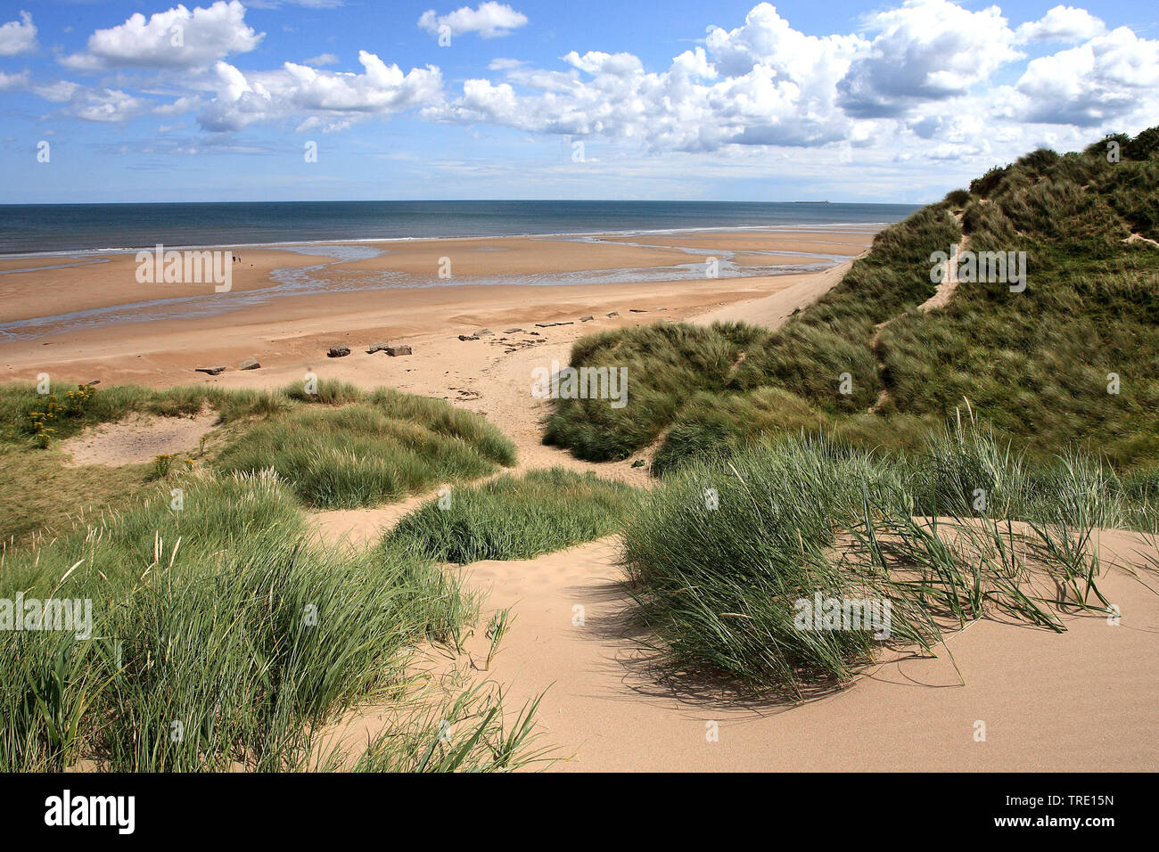 Duenen in Alnmouth, Grossbritannien, England, Northumberland | dunes in Alnmouth, United Kingdom, England, Northumberland | BLWS514224.jpg [ (c) blick - Stock Image