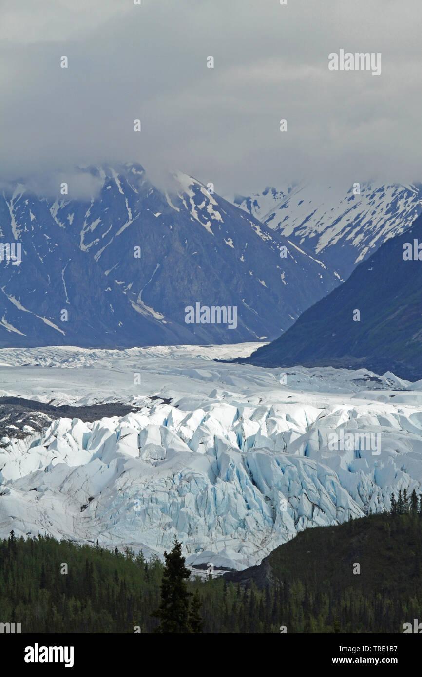 Matanuska Gletscher Alaska, USA, Alaska | Matanuska Glacier Alaska , USA, Alaska | BLWS514524.jpg [ (c) blickwinkel/AGAMI/P. Morris Tel. +49 (0)2302-2 - Stock Image