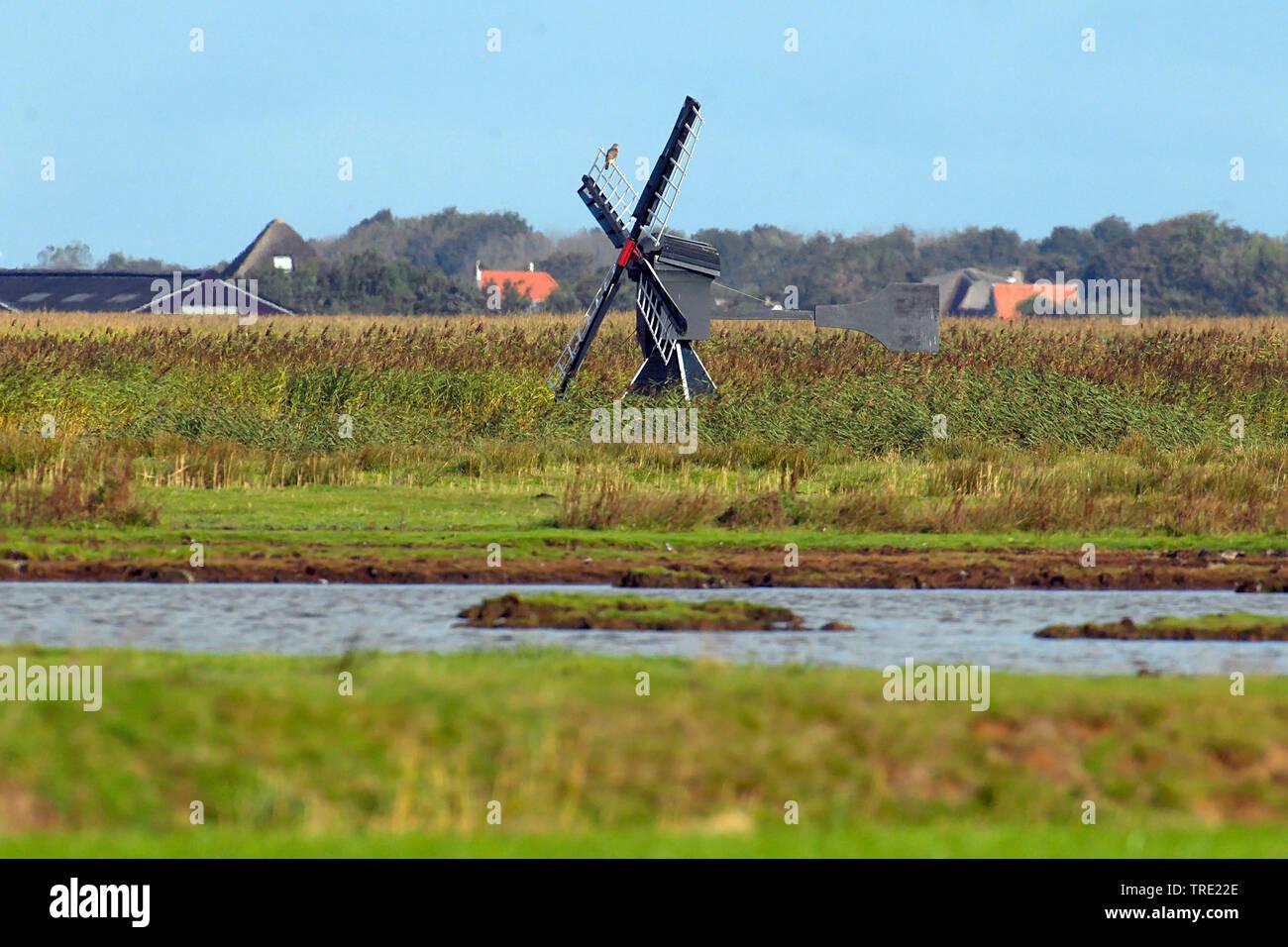 alte Bockwindmuehle im Naturreservat Dijkmanshuizen, Niederlande, Texel   Windmill at nature reserve Dijkmanshuizen, Netherlands, Texel   BLWS515063.j - Stock Image