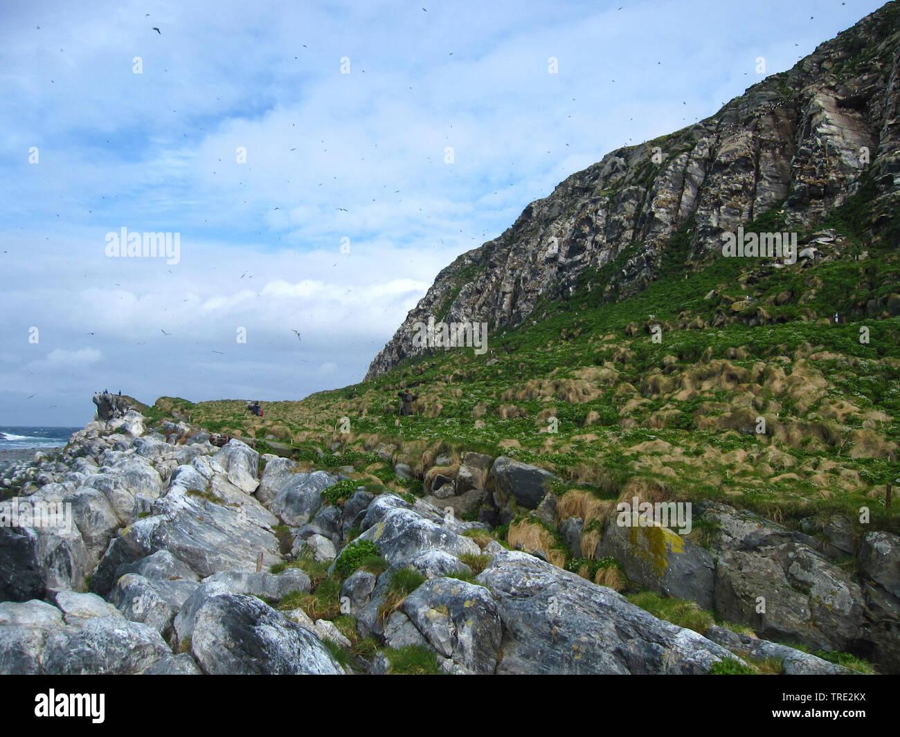 Varangerfjord, Norwegen | Varangerfjord, Norway | BLWS515585.jpg [ (c) blickwinkel/AGAMI/A. Ouwerkerk Tel. +49 (0)2302-2793220, E-mail: info@blickwink - Stock Image