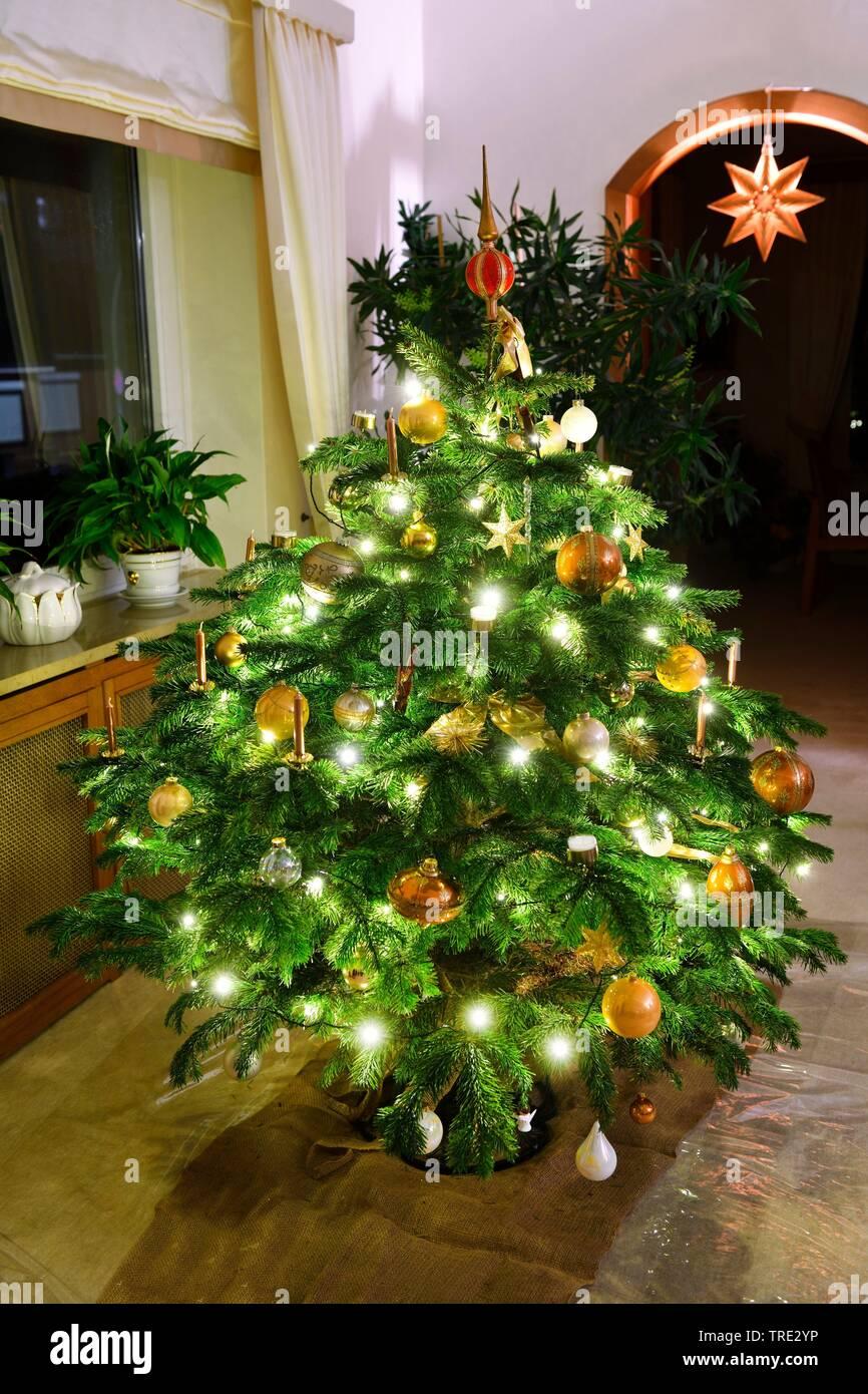 Nordmanntanne Weihnachtsbaum.Nordmanns Tanne Stock Photos Nordmanns Tanne Stock Images Alamy