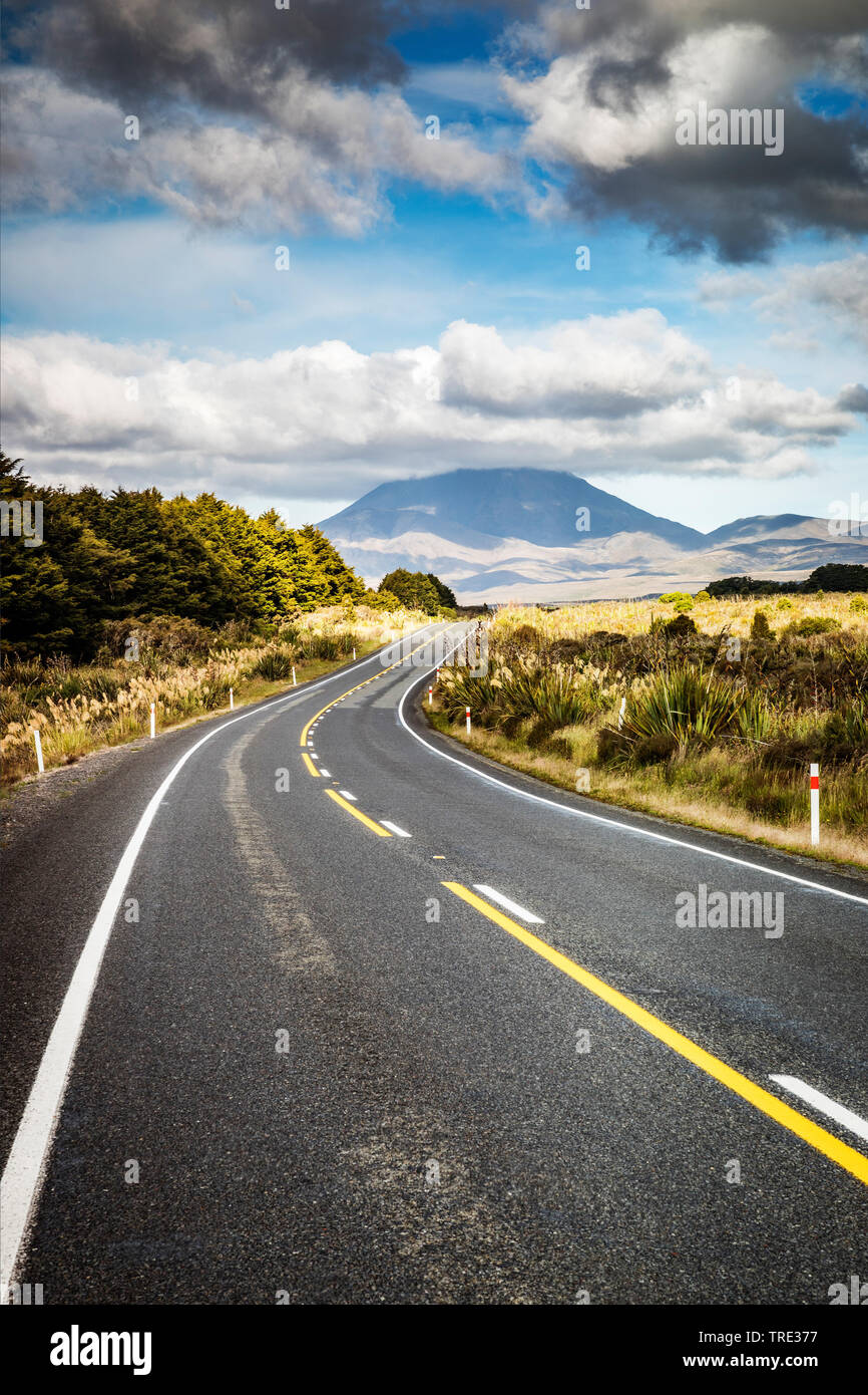 Strasse auf Neuseeland, Neuseeland, Nordinsel | road in New Zealand, New Zealand, Northern Island | BLWS516000.jpg [ (c) blickwinkel/McPHOTO/M. Gann T - Stock Image