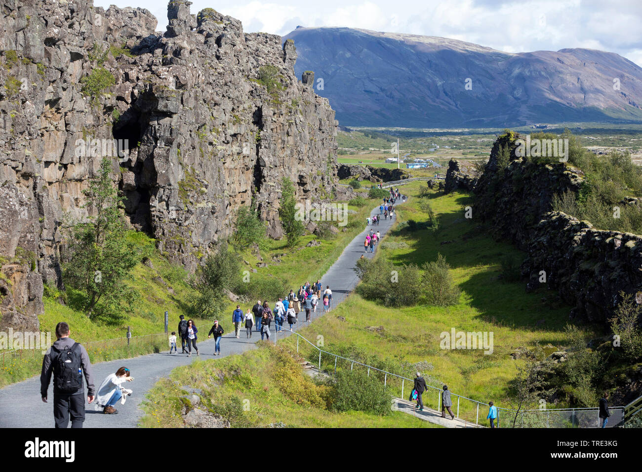 Almannagja, rift valley between the Eurasian and North-American plates, Iceland, Thingvellir National Park Stock Photo