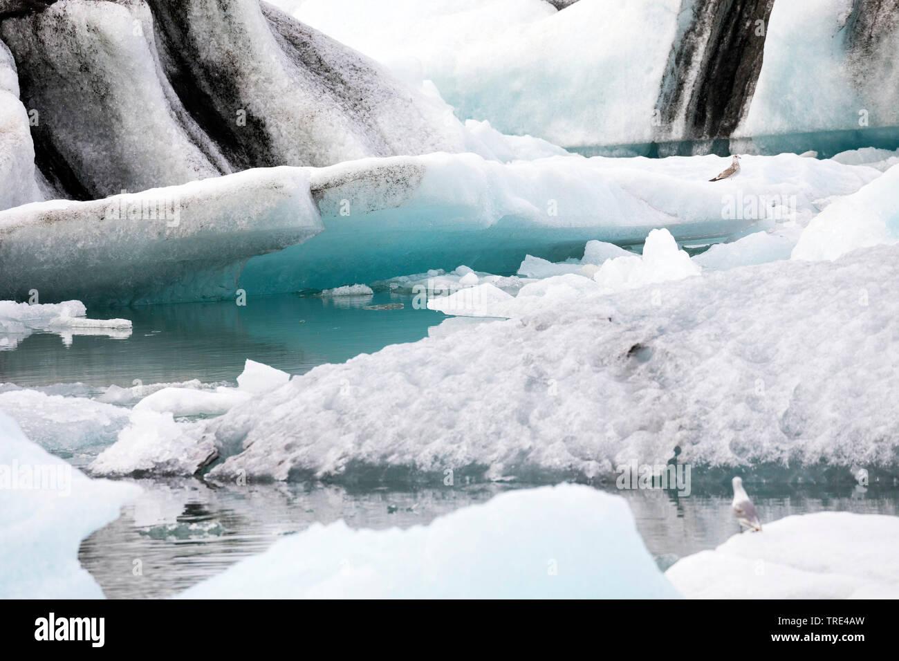 GletscherlaguneGletscherlagune Joekulsarlon, treibende Eisberge, die von der Gletscherzunge abgebrochen sind und in Richtung Meer treiben, Island, Vat - Stock Image