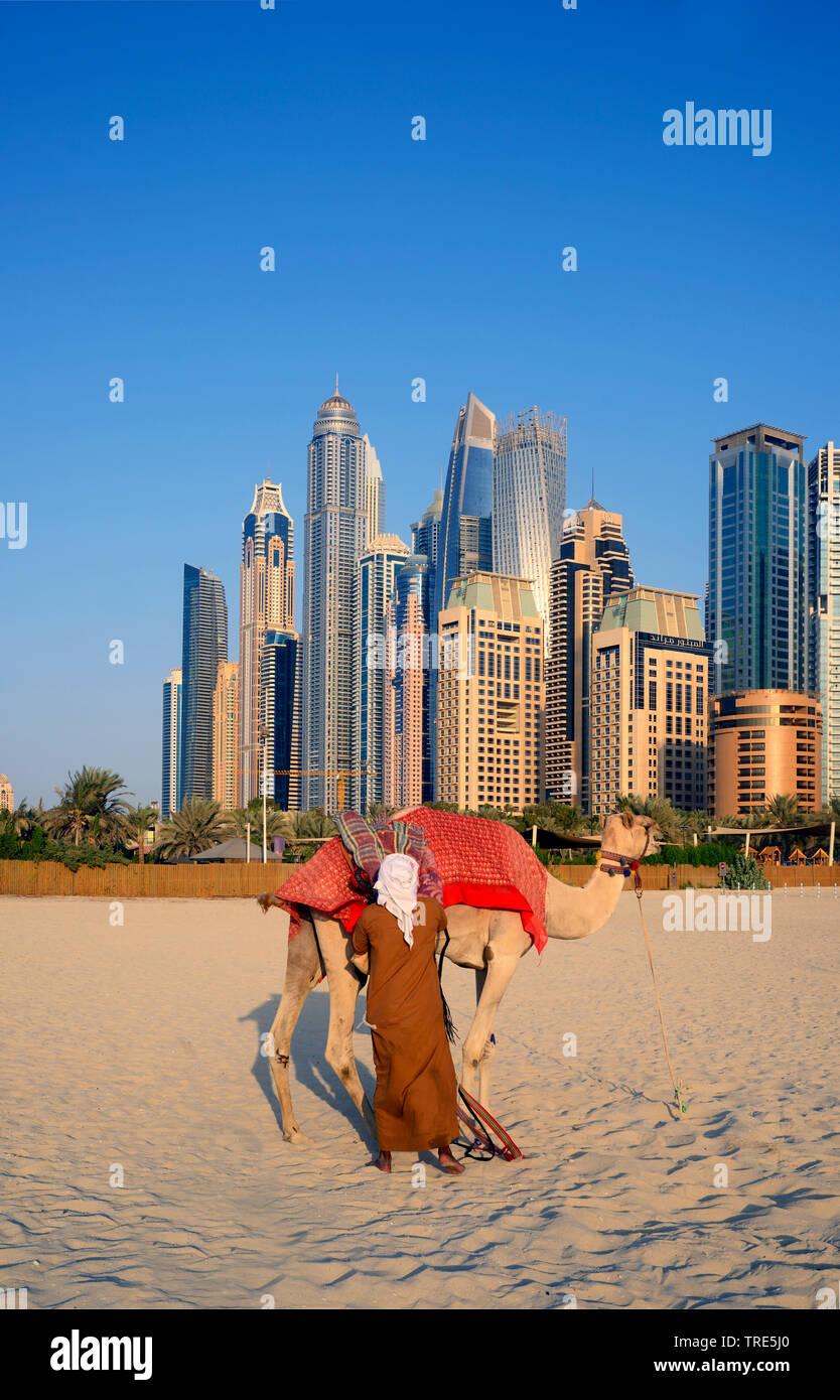 Kamel am Sandstrand Marina Dubai, Wolkenkratzer von Dubai im Hintergrund, Vereinigte Arabische Emirate, Dubai | camel on the beach of Marina Dubai, sk - Stock Image
