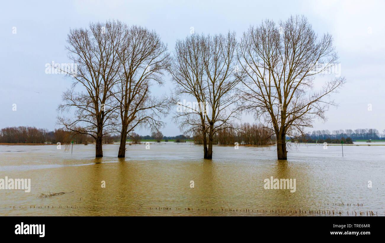 IJssel bei Hochwasser, Niederlande, Overijssel, Ijsselmeer, Welsum | IJssel high water, Netherlands, Overijssel, Ijsselmeer, Welsum | BLWS518676.jpg [ - Stock Image