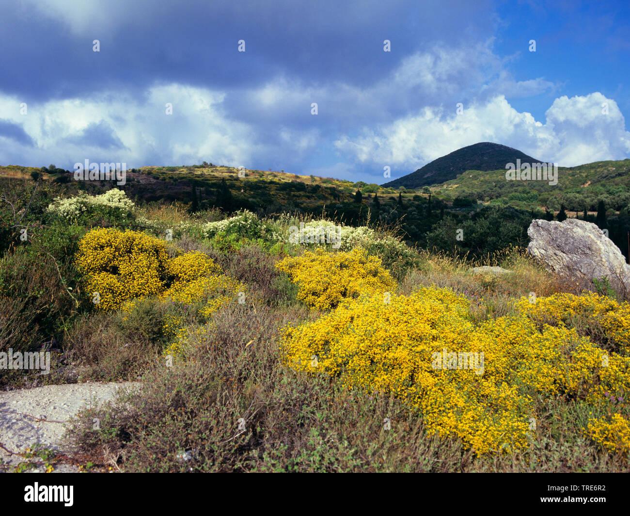 bluehende Macchie, Griechenland, Korfu | blooming macchia, Greece, Corfu | BLWS518743.jpg [ (c) blickwinkel/W. Layer Tel. +49 (0)2302-2793220, E-mail: - Stock Image