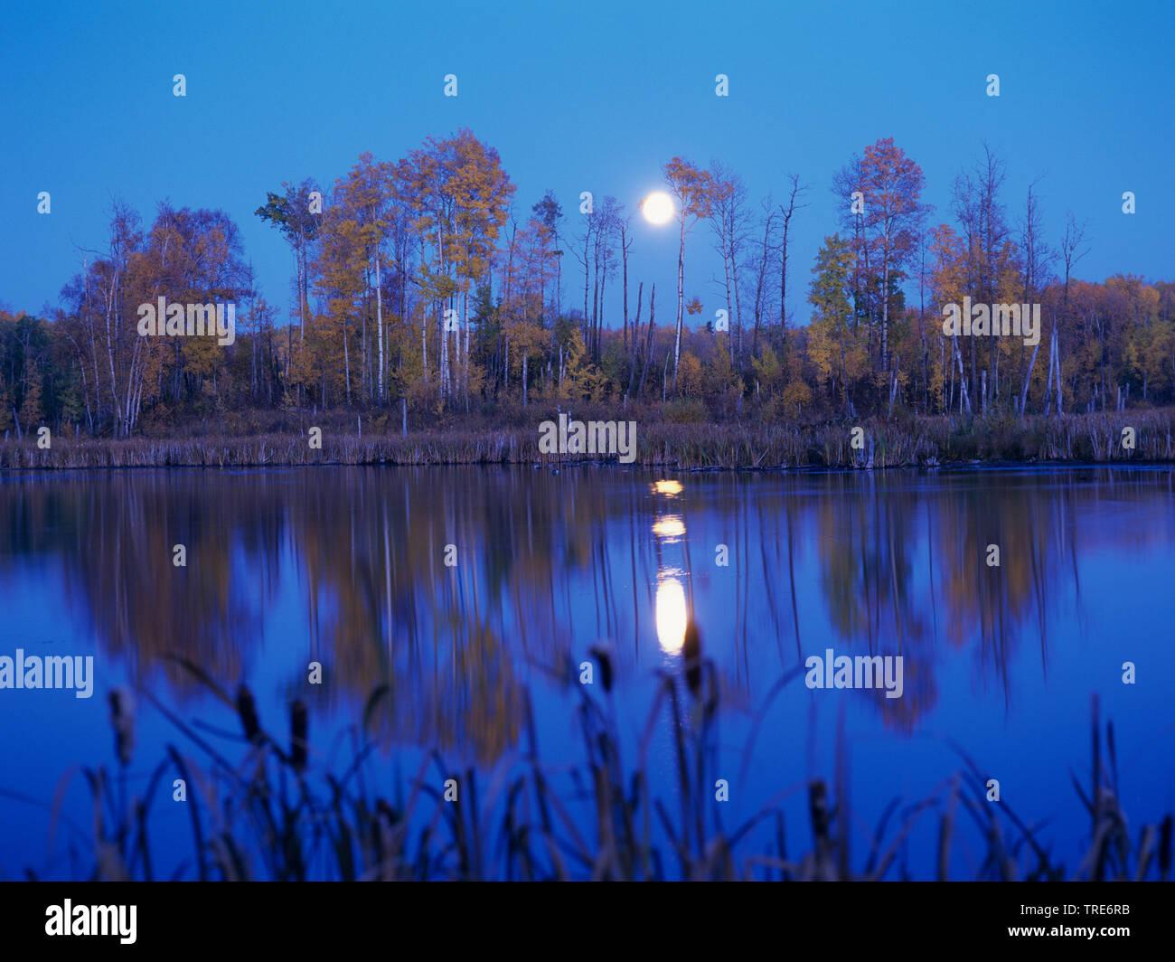 Mondaufgang am See, Deutschland   lake at moonrise , Germany   BLWS518746.jpg [ (c) blickwinkel/W. Layer Tel. +49 (0)2302-2793220, E-mail: info@blickw - Stock Image