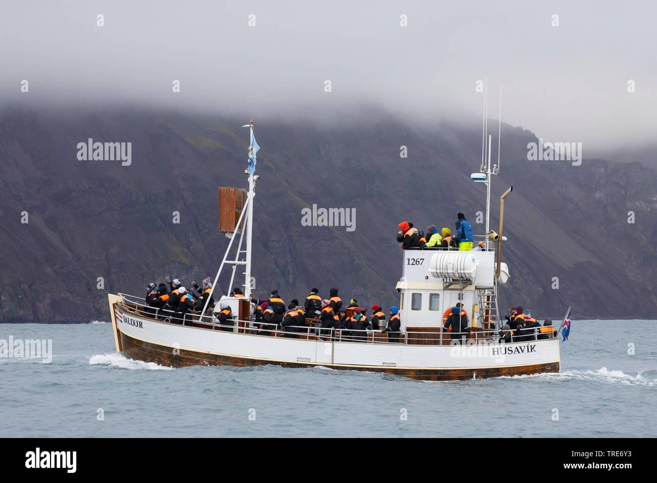 Walbeobachtung, Island, Husavik | whale watching, Iceland, Husavik | BLWS518842.jpg [ (c) blickwinkel/F. Hecker Tel. +49 (0)2302-2793220, E-mail: info - Stock Image