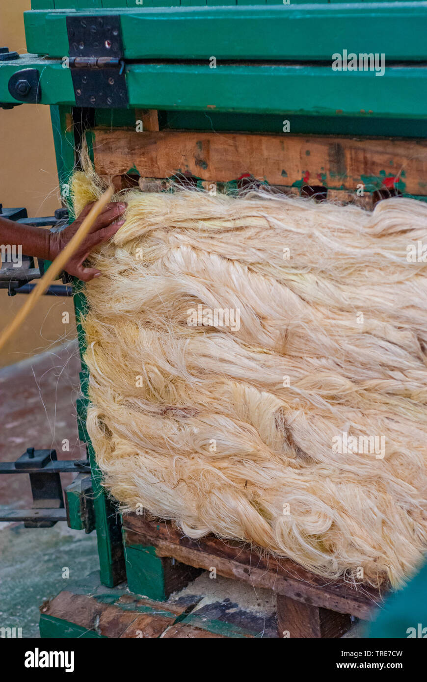 Agave plant fibers in compression, used to build ropes, taken from Tecoh, in the Yucatan peninsula - Stock Image
