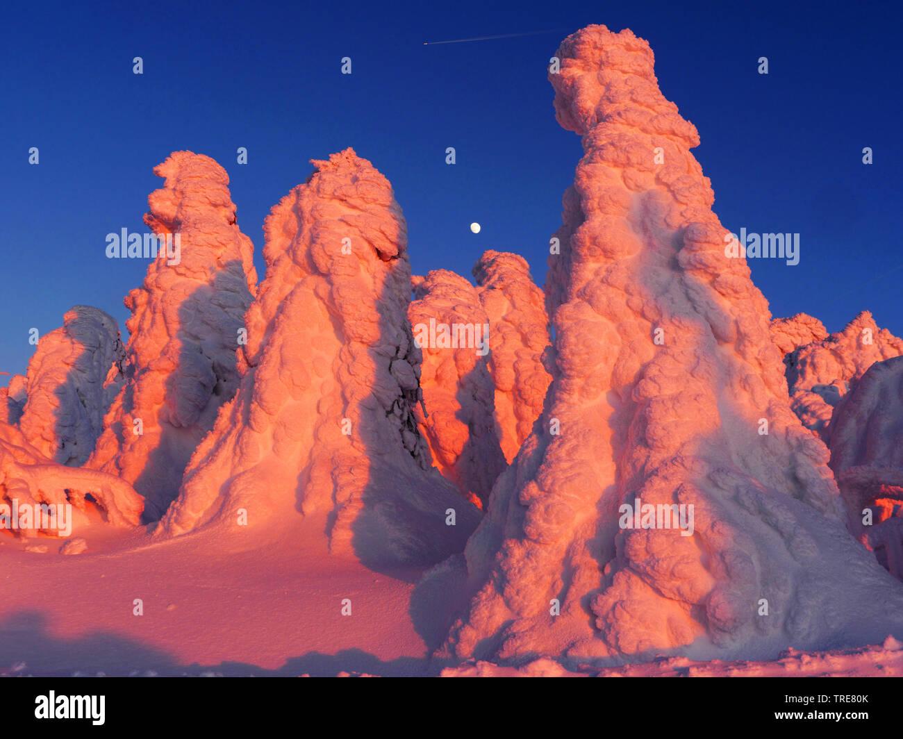 verschneite Baeume im Erzgebirge bei Sonnenuntergang, Deutschland, Sachsen, Erzgebirge   snow-covered trees at sunset, Germany, Saxony, Erz Mountains - Stock Image