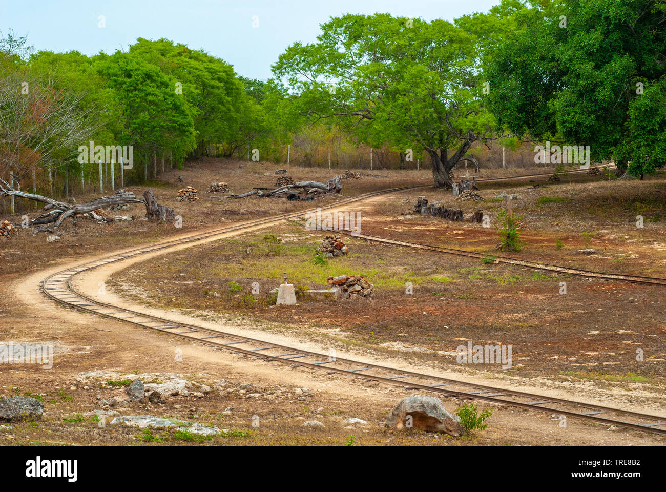 Sorting area with rails, taken in a plantation of Agave, in Tecoh, in the Yucatan peninsula - Stock Image