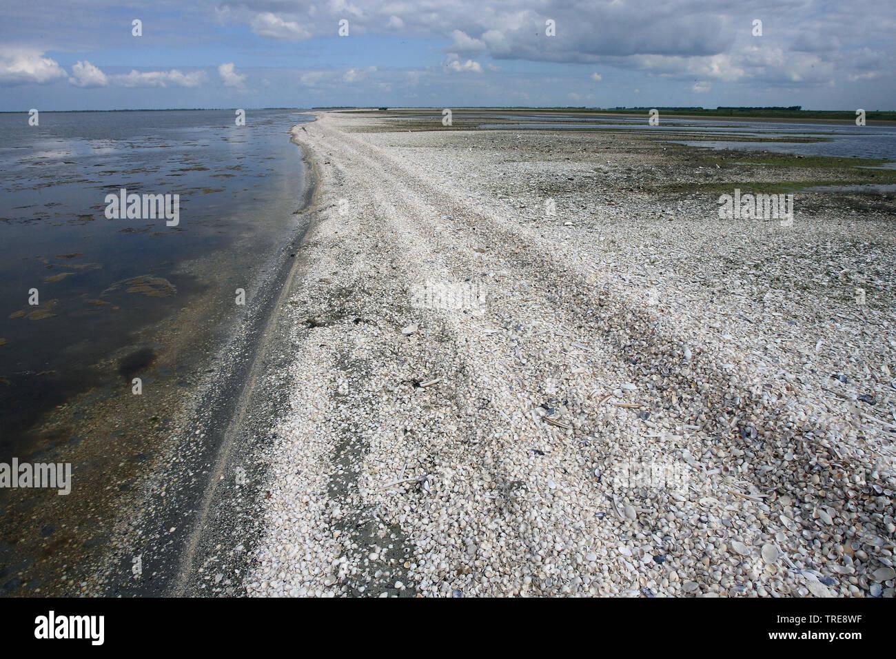 Nordseekueste, Niederlande, Goeree-Overflakkee | North Sea coast, Netherlands, Goeree-Overflakkee | BLWS520231.jpg [ (c) blickwinkel/AGAMI/J. van der - Stock Image
