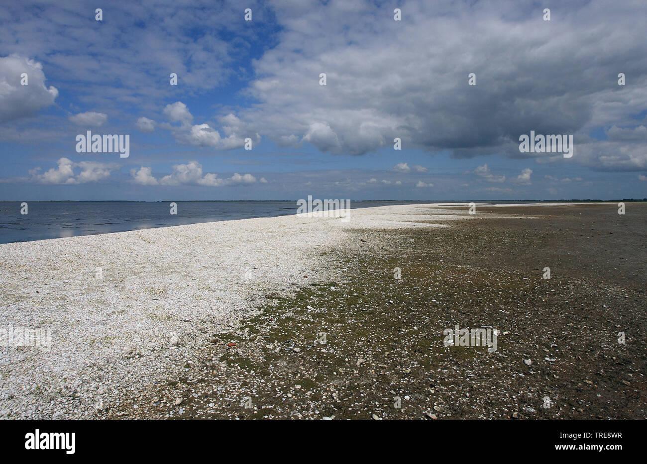Nordseekueste, Niederlande, Goeree-Overflakkee | North Sea coast, Netherlands, Goeree-Overflakkee | BLWS520232.jpg [ (c) blickwinkel/AGAMI/J. van der - Stock Image
