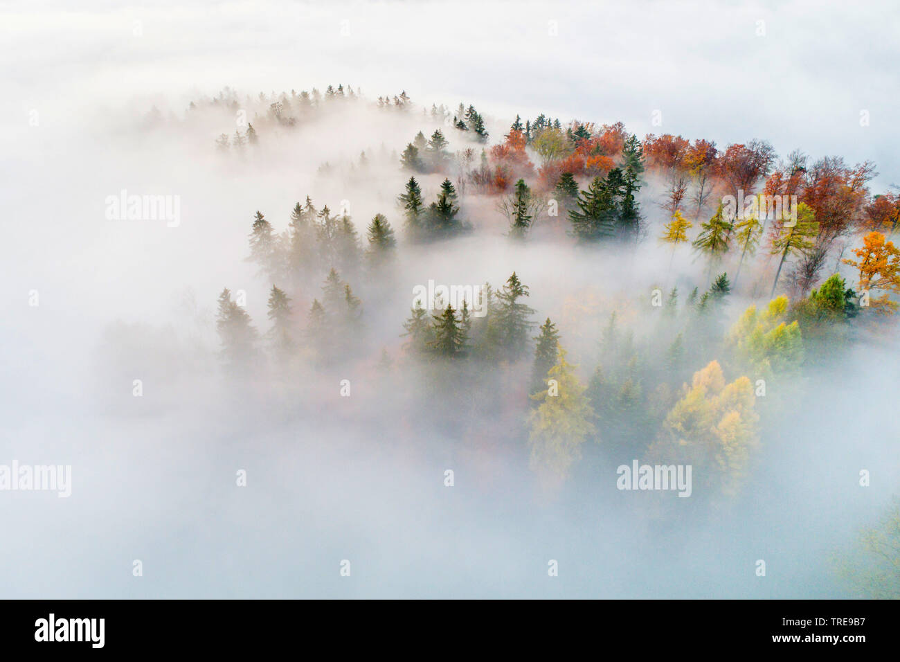 Mischwald mit Nebelschwaden, Drohnenaufnahme, Schweiz, Zuercher Oberland | mixed forest with mist, drone picture, Switzerland, Zuercher Oberland | BLW - Stock Image