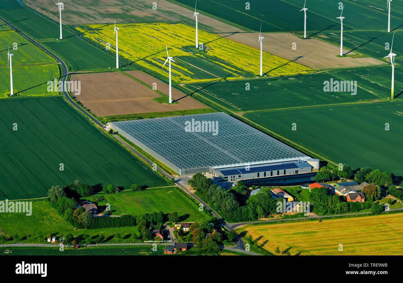 groesstes energieneutrales Bio-Gewaechshaus Deutschlands in Woehrden, Winraeder in den Marschgebieten, Luftbild, Deutschland, Schleswig-Holstein, Krei - Stock Image