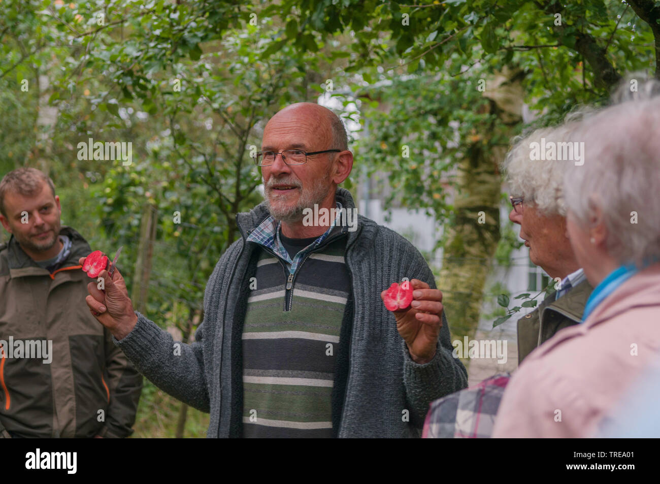 verschiedene Apfelsorten werden in einer Plantage vorgestellt, Deutschland, Schleswig-Holstein   different apple cultivars are presented, Germany, Sch - Stock Image