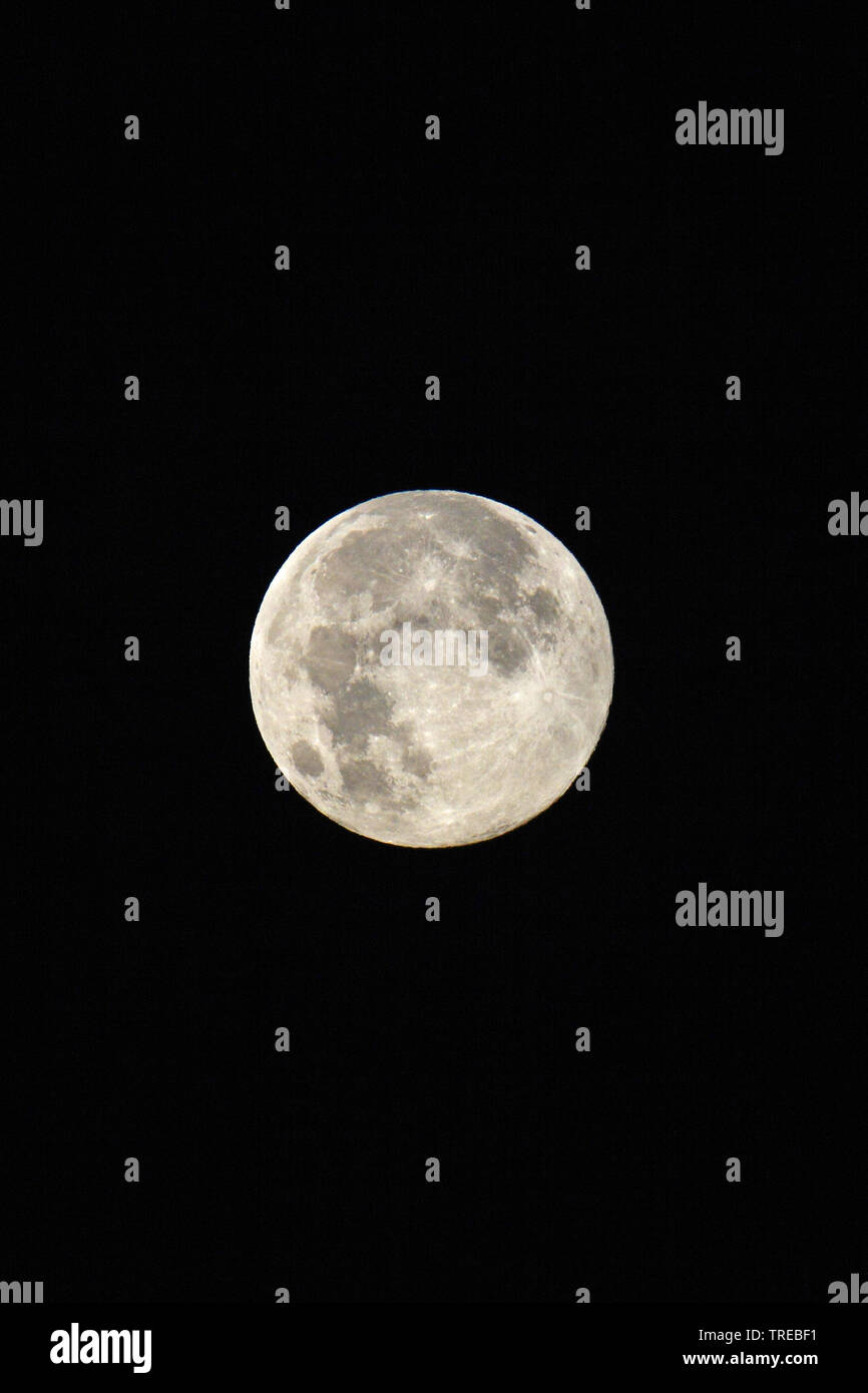 Vollmond, Deutschland | full moon, Germany | BLWS522151.jpg [ (c) blickwinkel/McPHOTO/U. Schwenk Tel. +49 (0)2302-2793220, E-mail: info@blickwinkel.de - Stock Image