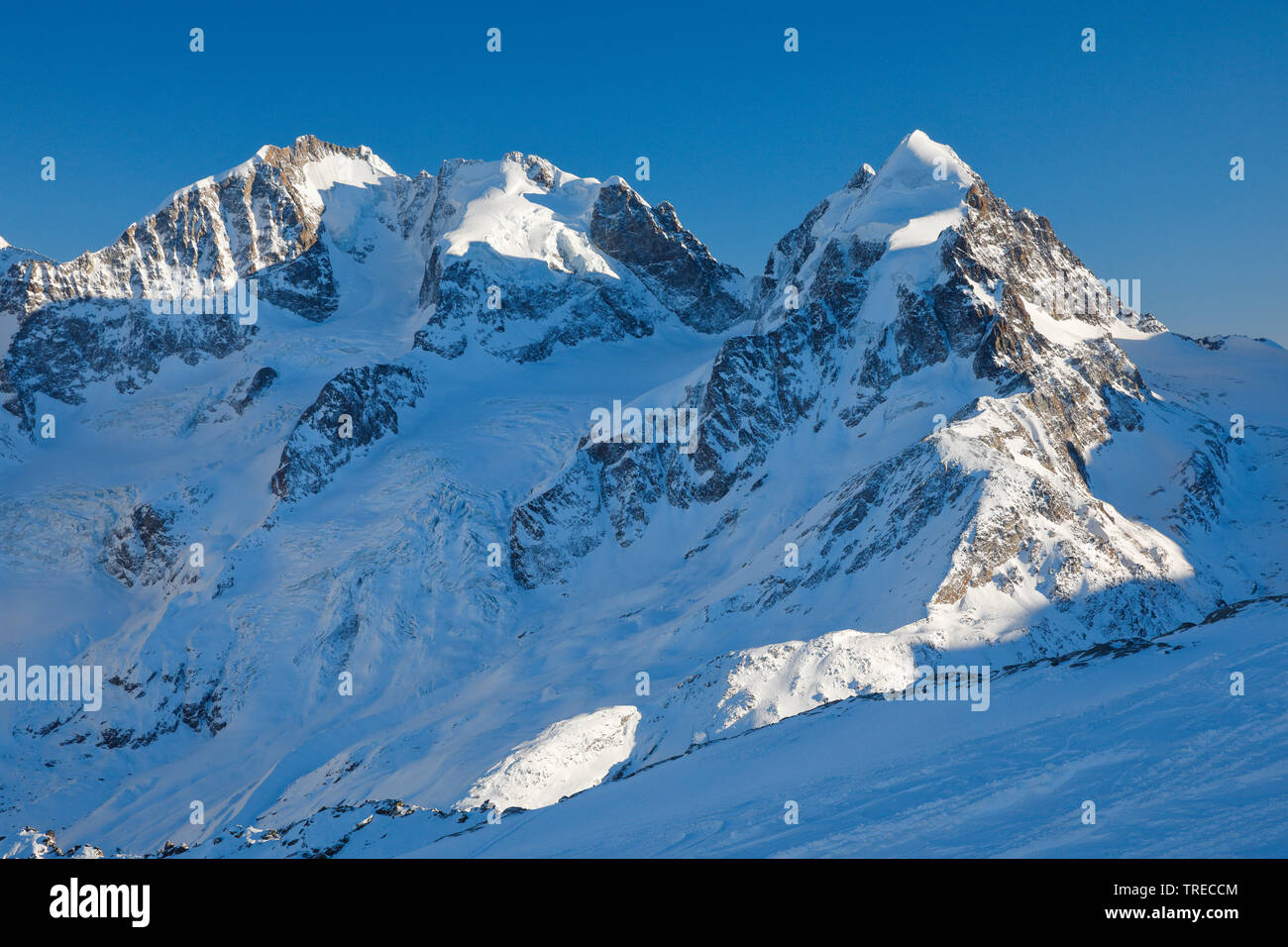 Biancograt mit Piz Bernina-4049 m, Piz Scerscen - 3971 m, Piz Roseg-3937 m, Schweiz, Graubuenden, Oberengadin   Biancograt with Piz Bernina-4049 m, Pi - Stock Image