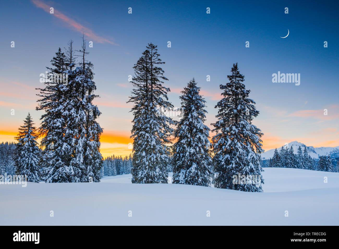 Sonnenuntergang Alp Sellamatt, Schweiz   sunset Alp Sellamatt, Switzerland   BLWS522845.jpg [ (c) blickwinkel/P. Frischknecht Tel. +49 (0)2302-2793220 - Stock Image