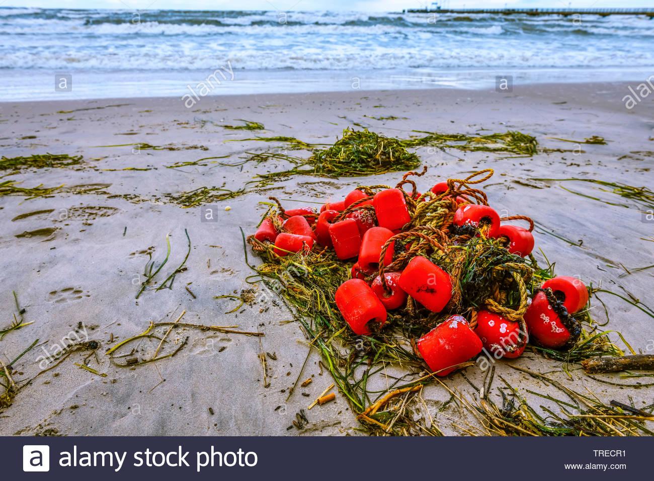 Angespuelte Reste von einem Fischernetz nach Sturm, Deutschland, Schleswig-Holstein, Scharbeutz   wash up fishing net at the coast after storm, German - Stock Image