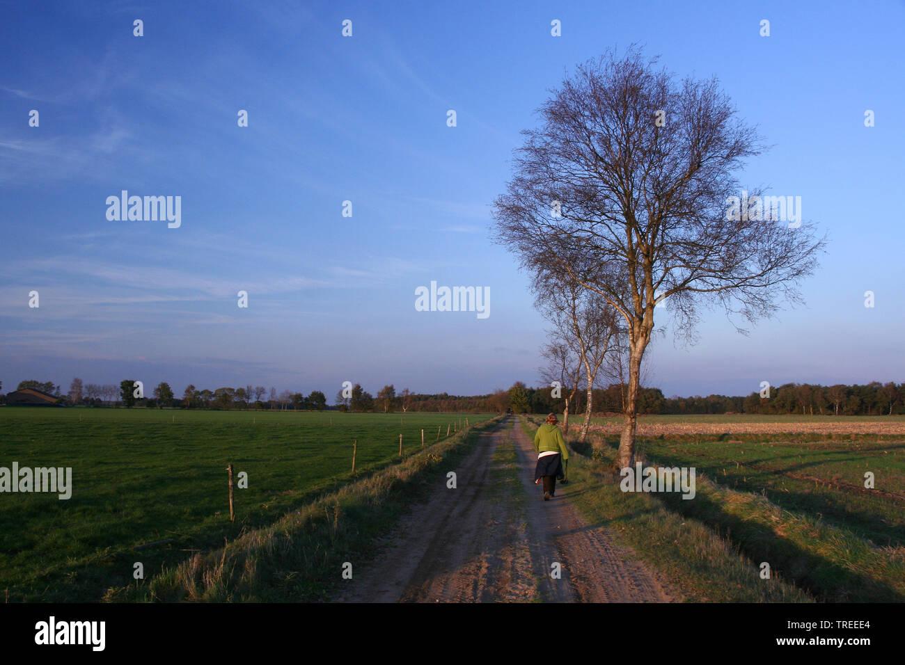 Region Duc de Brabant, Niederlande | region Duc de Brabant, Netherlands | BLWS524335.jpg [ (c) blickwinkel/AGAMI/B. Haasnoot Tel. +49 (0)2302-2793220, - Stock Image