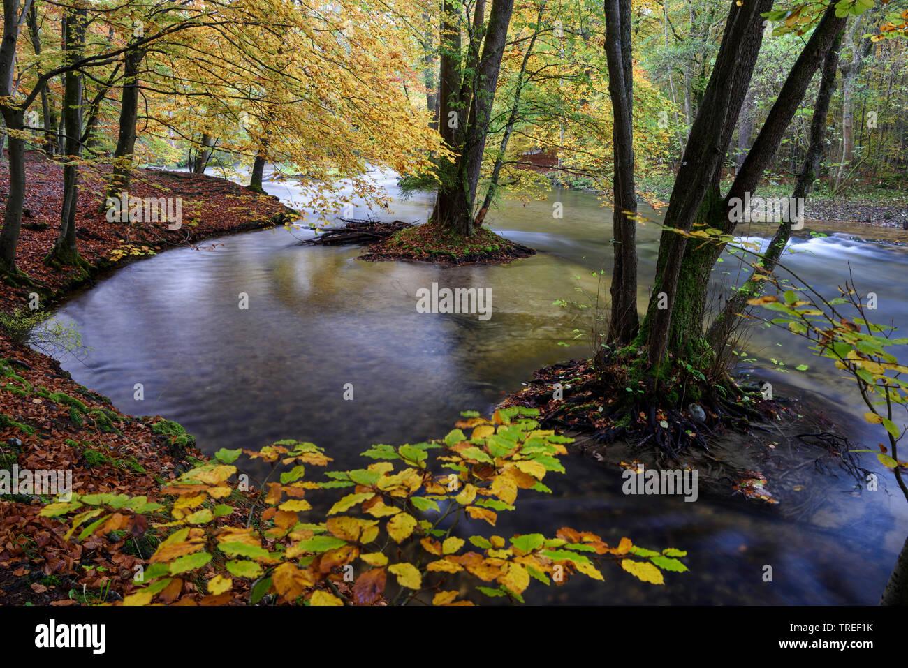 Bachtal mit herbstlichen Laubwald im Wuermtal, Deutschland, Bayern | creek in autumnal forest in the Wuermtal valley, Germany, Bavaria | BLWS524874.jp - Stock Image