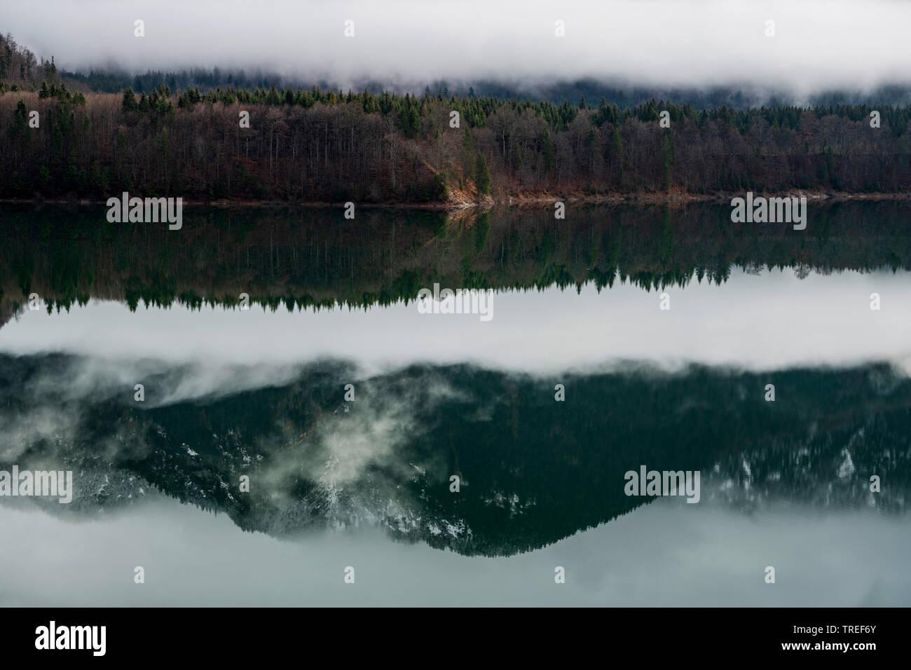 Sylvensteinsee mit Spiegelungen der Landschaft im Wasser, Deutschland, Bayern, Karwendel-Gebirge | Lake Sylvenstein with mirror image of the landscape - Stock Image