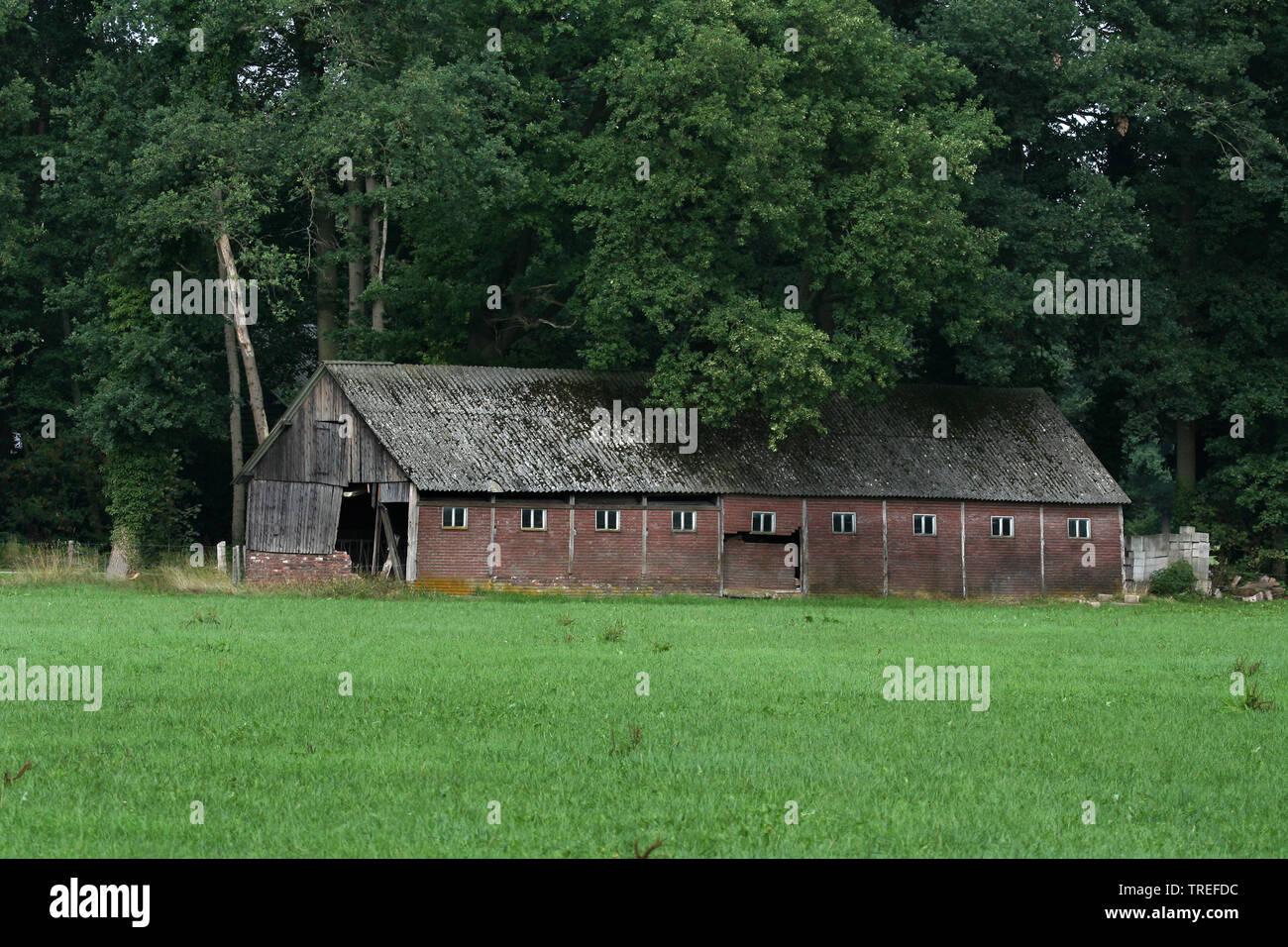 zerfallene Scheune am Waldrand, Niederlande, Gelderland, Achterhoek | decaying barn at forest edge, Netherlands, Gelderland, Achterhoek | BLWS525265.j - Stock Image