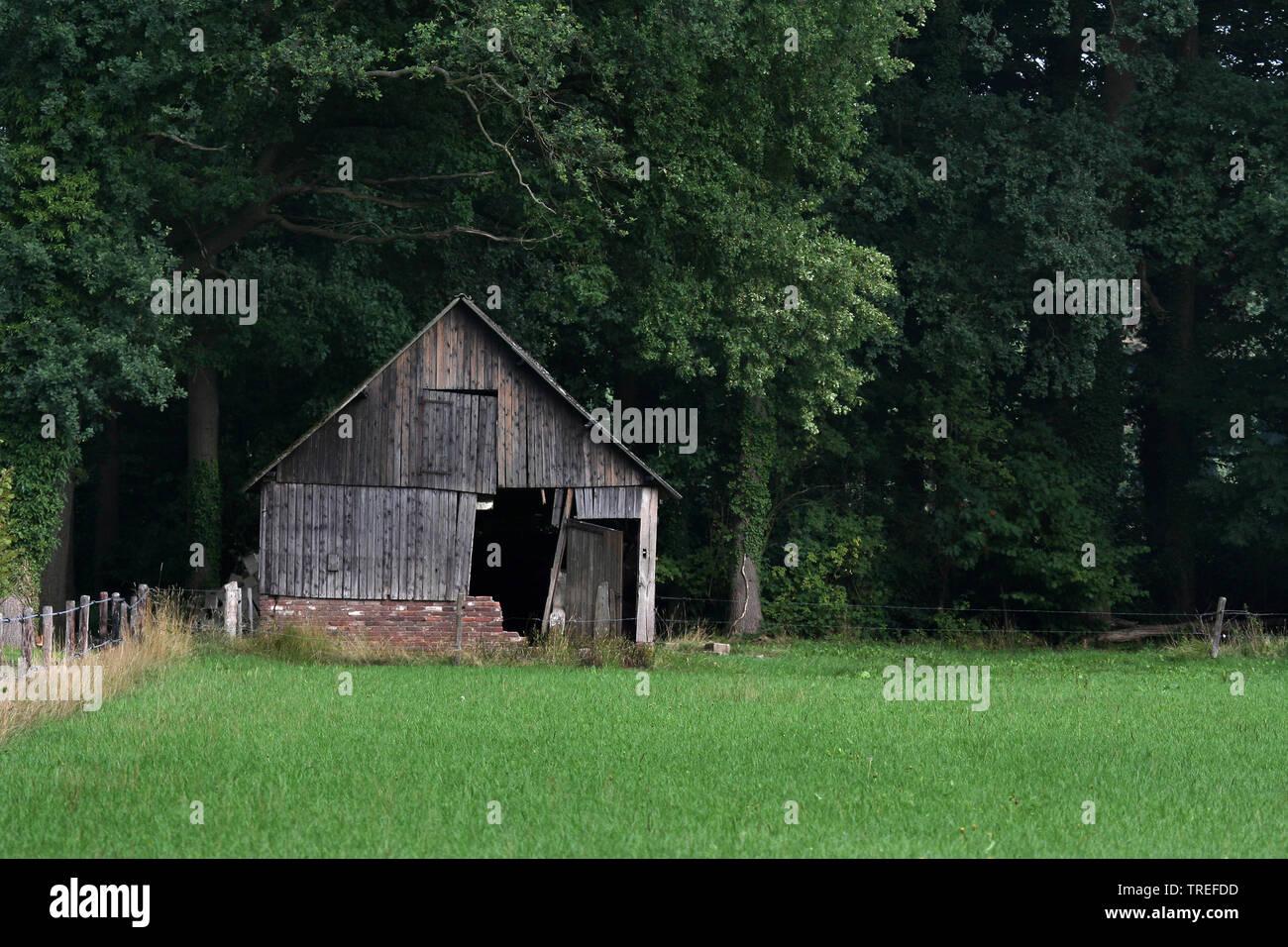 zerfallene Scheune am Waldrand, Niederlande, Gelderland, Achterhoek | decaying barn at forest edge, Netherlands, Gelderland, Achterhoek | BLWS525266.j - Stock Image