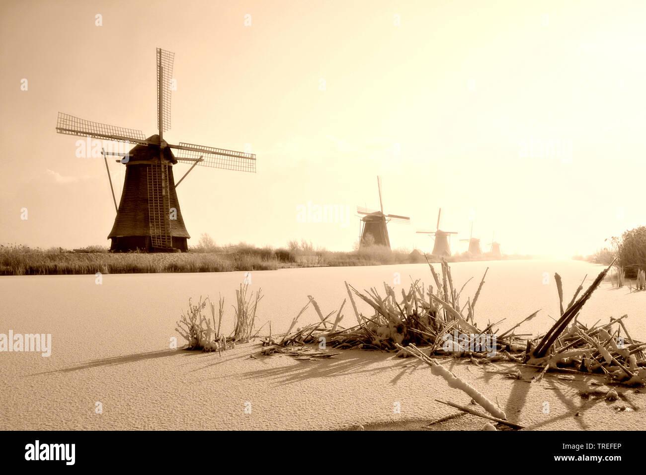 Windmuehlen von Kinderdijk im Winter, Niederlande, Kinderdijk | the windmills of Kinderdijk in winter, Netherlands, Kinderdijk | BLWS525298.jpg [ (c) - Stock Image