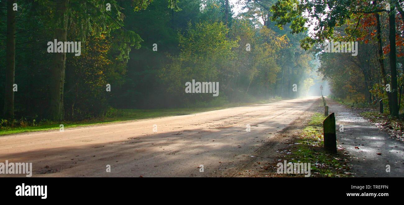 Weg durch den Wald Duc de Brabant, Niederlande, Noord-Brabant, Neterselsche Heide | road through forest Duc de Brabant, Netherlands, Noord-Brabant, Ne - Stock Image