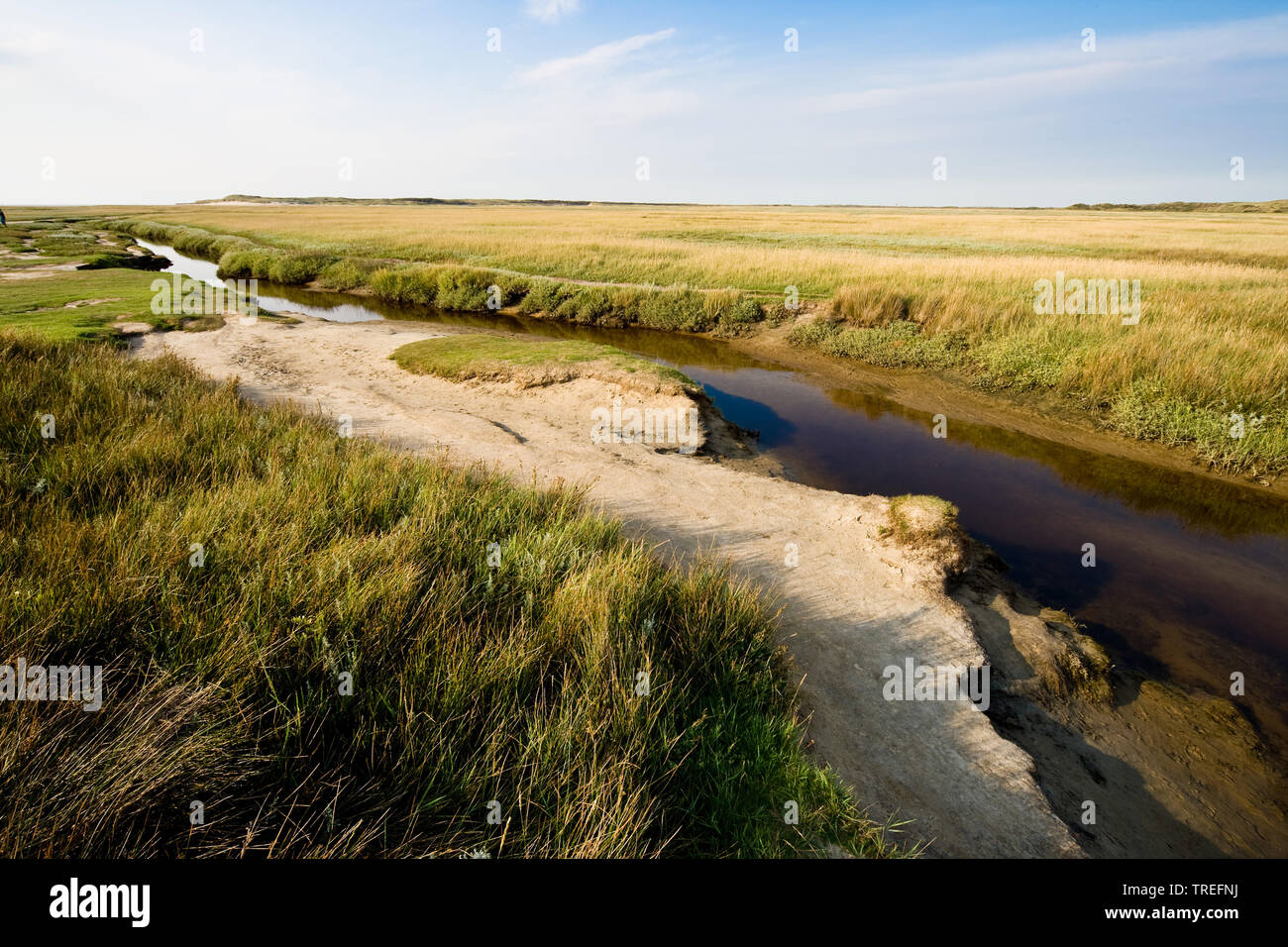 Priel in den Salzwiesen De Slufter, Niederlande, Texel, De Slufter, De Slufter   marsh meadows De Slufter with tide way, Netherlands, Texel, De Slufte - Stock Image