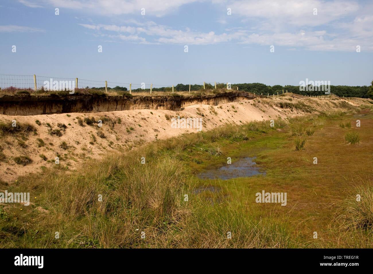 Uferschwalbe, Ufer-Schwalbe (Riparia riparia), Brutwand in Groeve Oostermeent, Niederlande, Utrecht, Blaricum | sand martin (Riparia riparia), breedin - Stock Image